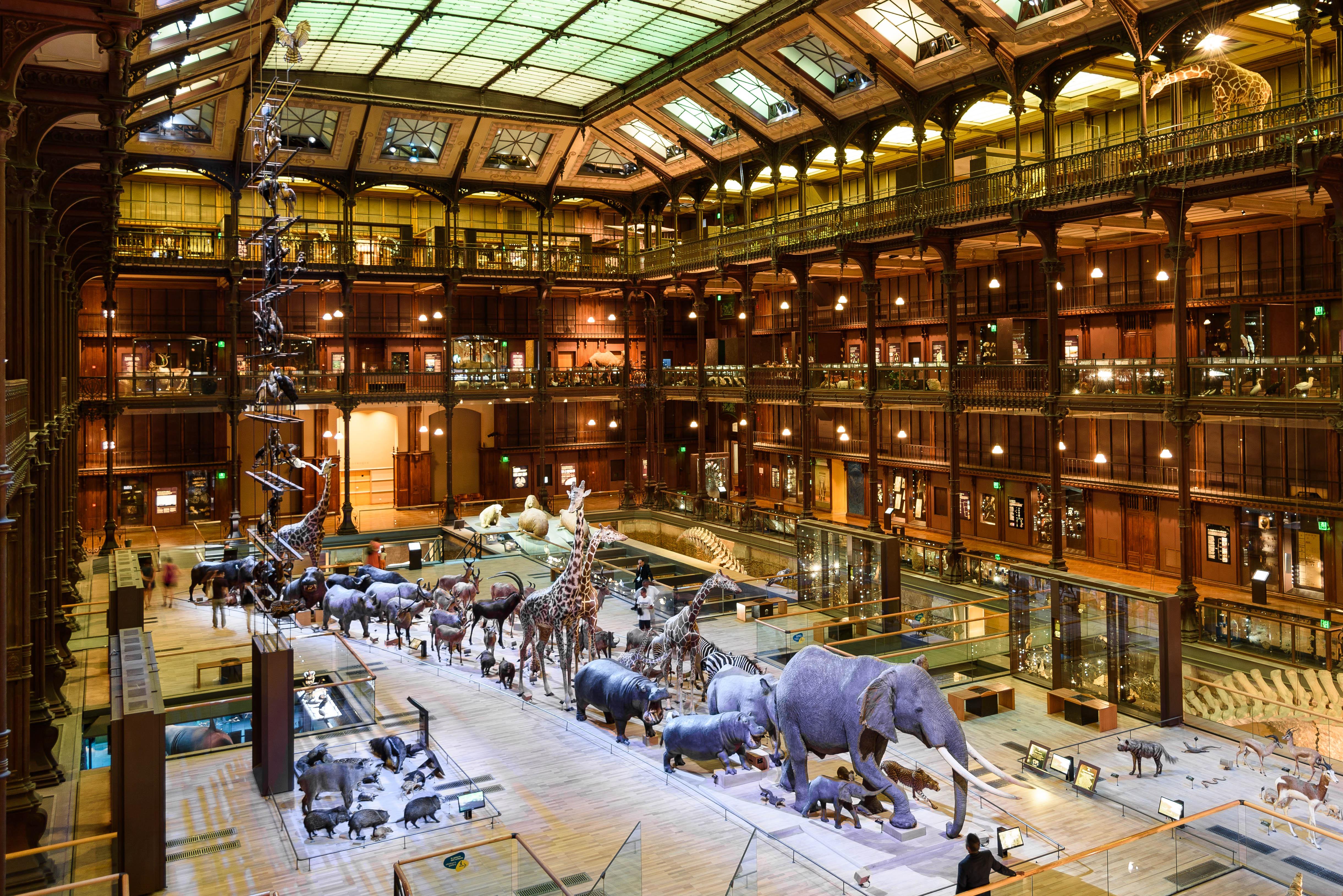 British Museum Natural History Entomology