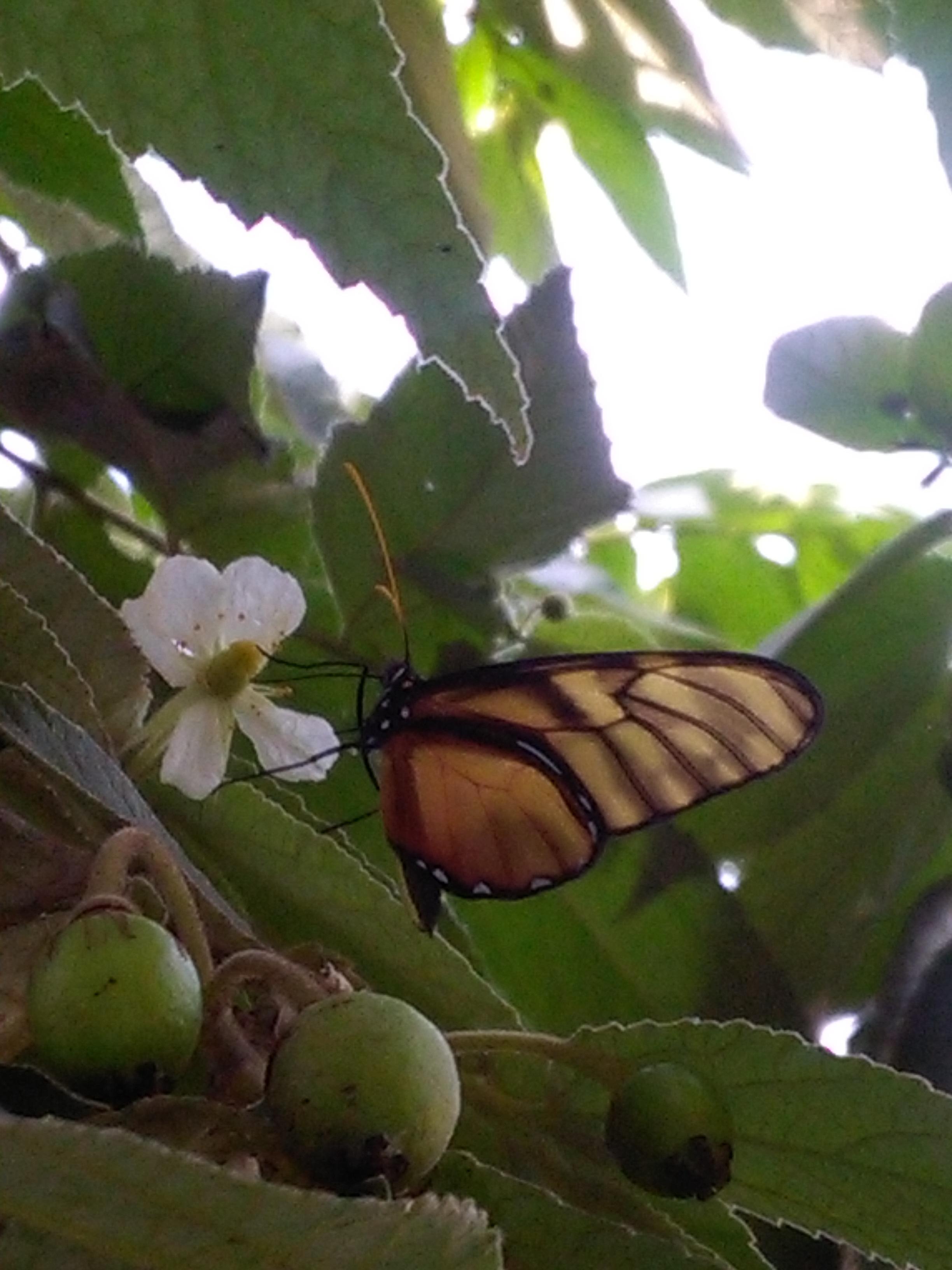 paling populer 17 gambar kupu kupu dan bunga