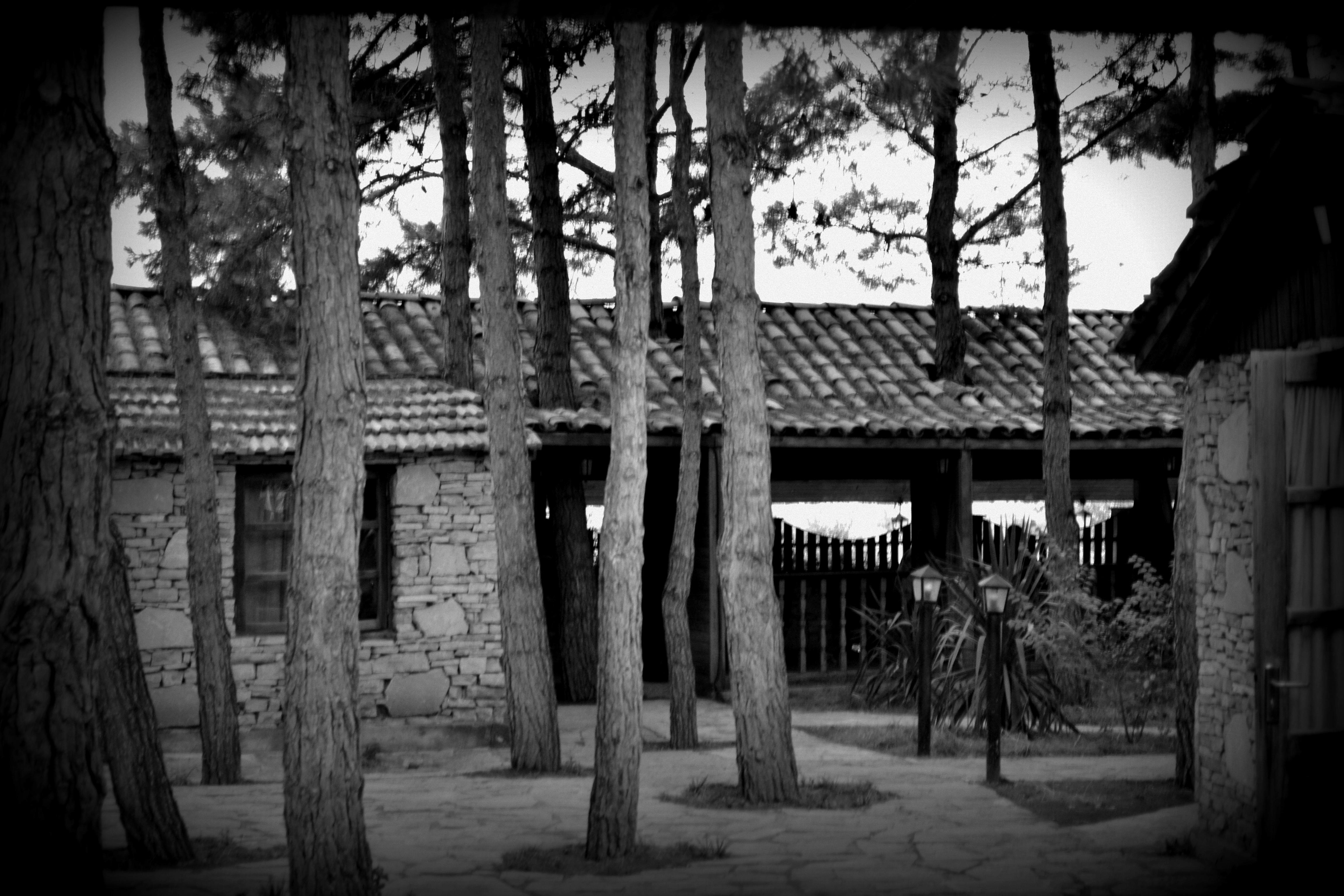 Bw Photo Black Tree Black And White Monochrome Photography Woody