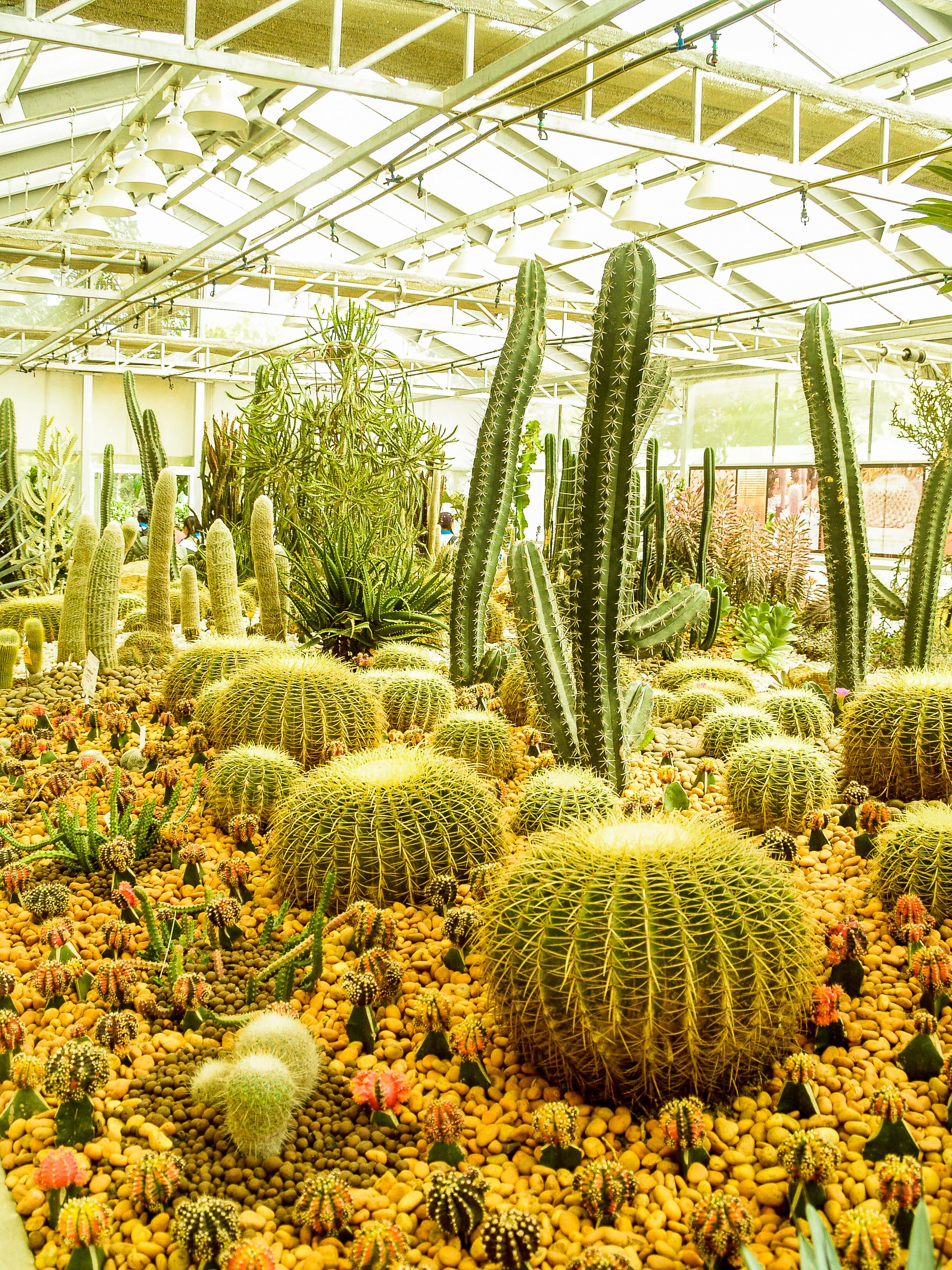 Kostenlose foto Kaktus Wüste Grün Natur saftig