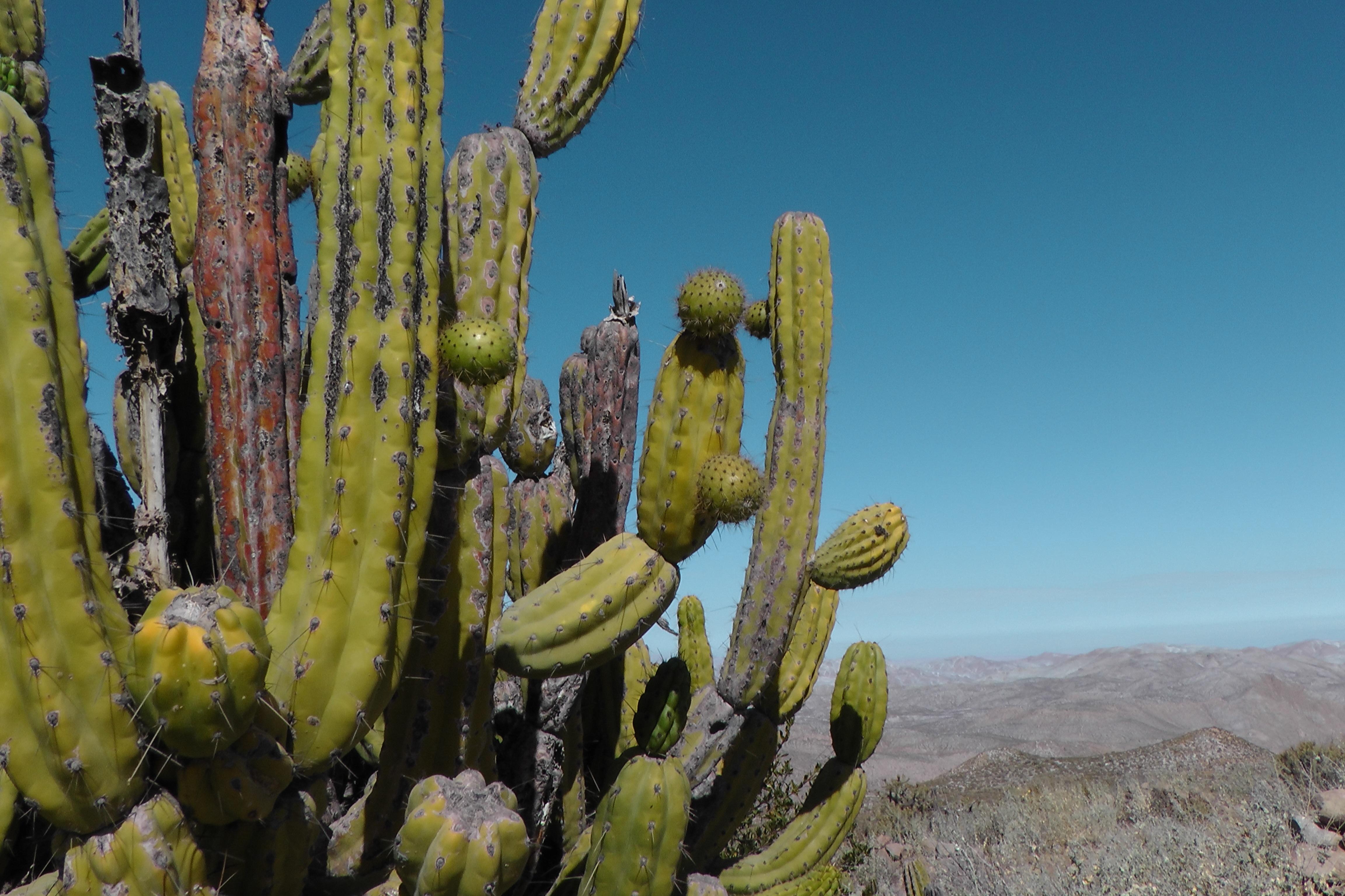 Gratis billeder rken blomst t r botanik flora peru for Plante western