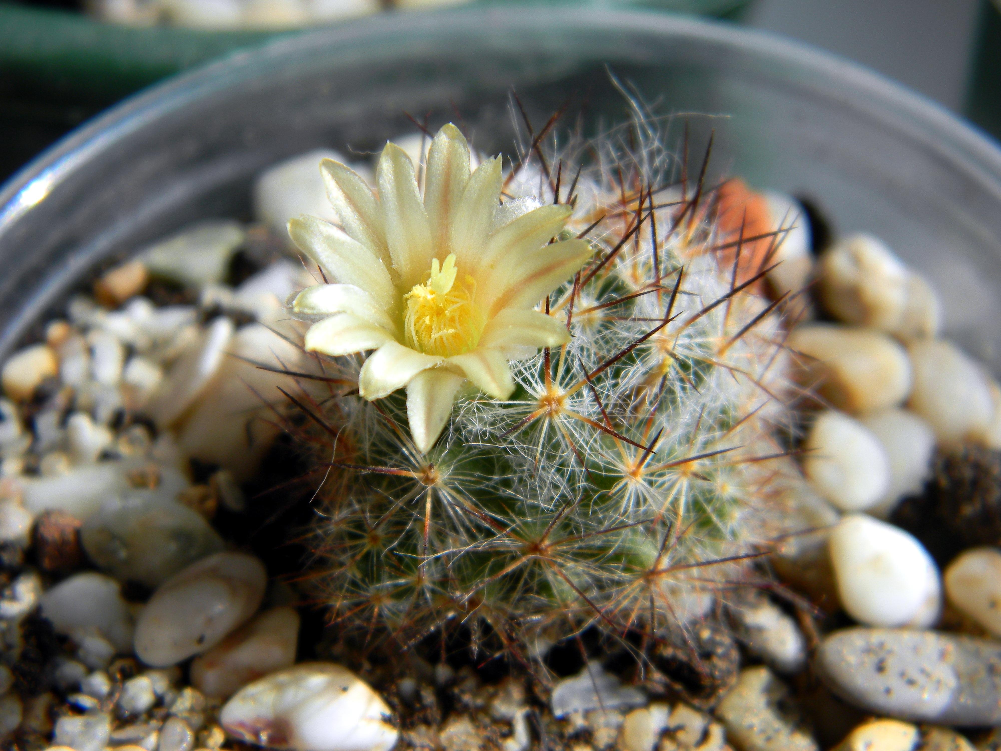 Free Images : bloom, green, botany, succulent, closeup