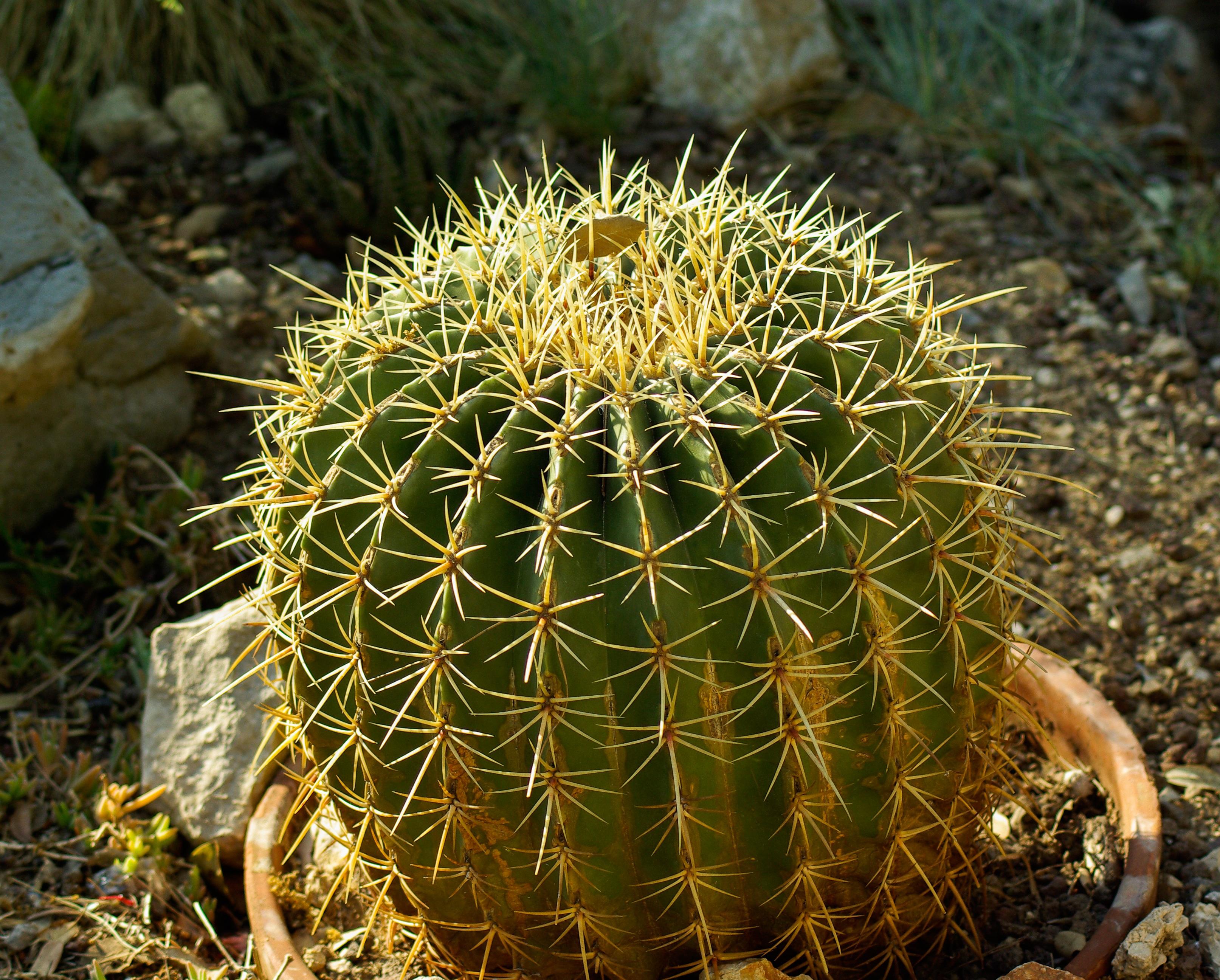 плохой ядовитые кактусы фото свежие новости
