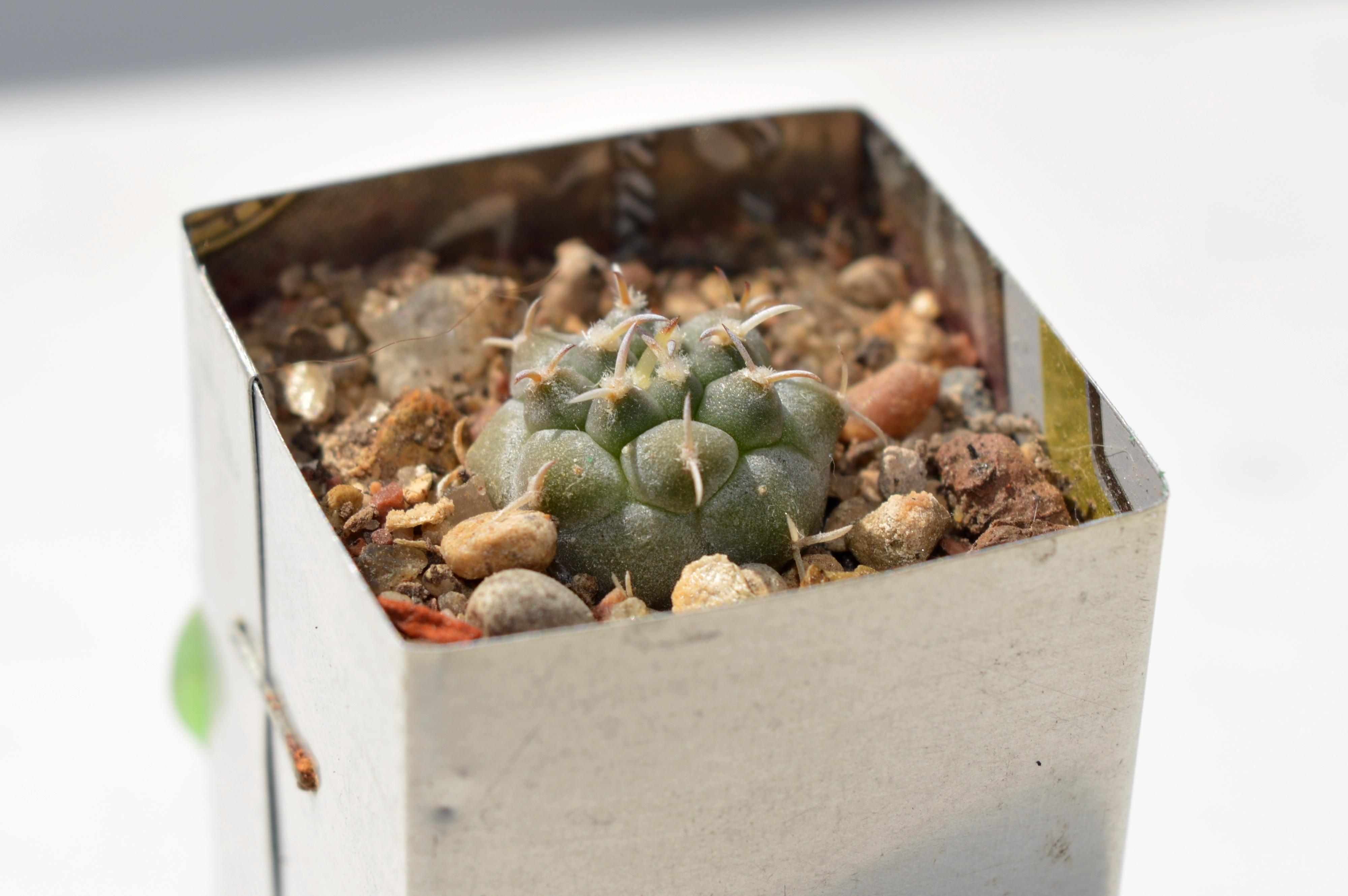 Free Images : cactus, green, collection, succulent, closeup, flora ...