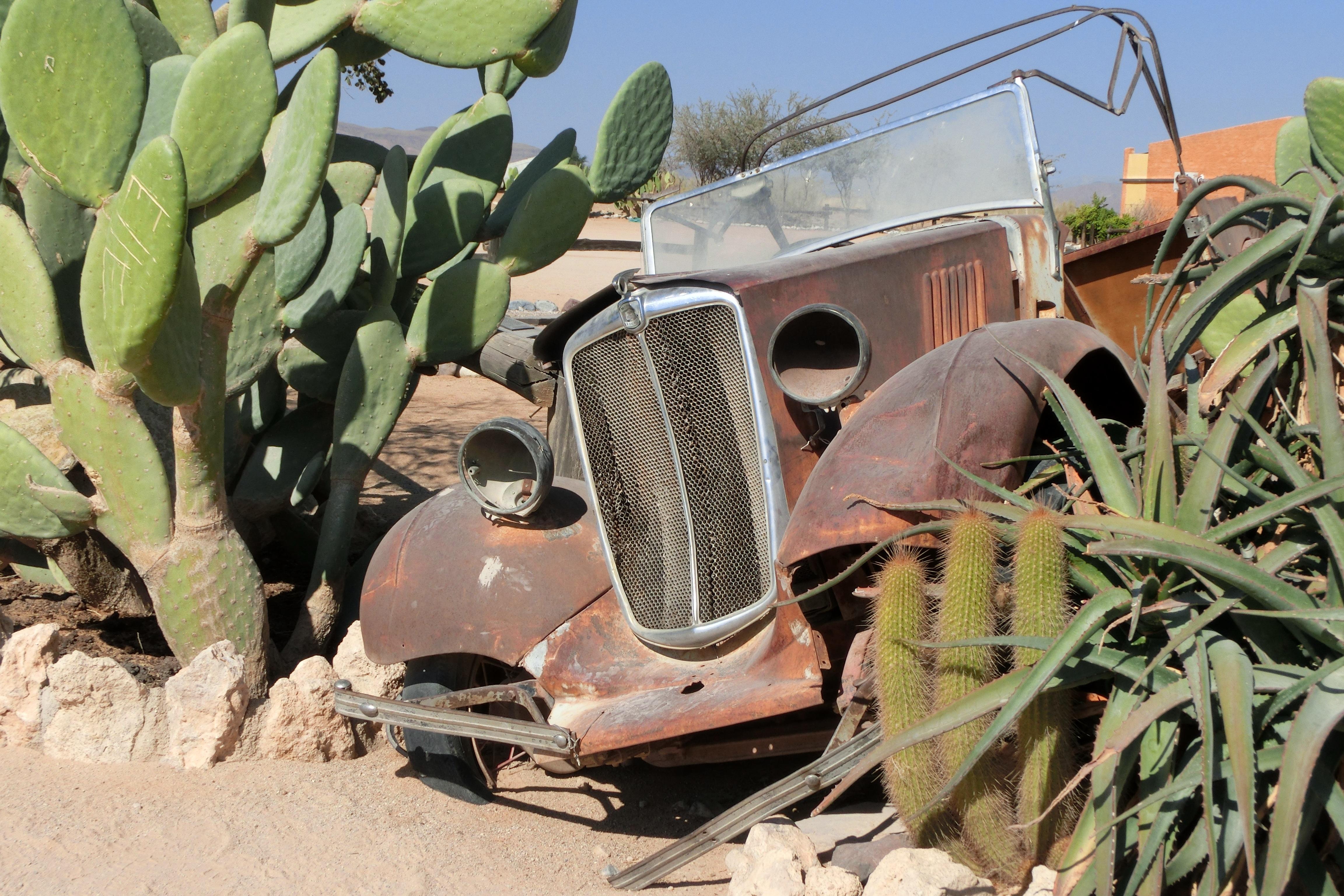 gambar kaktus menanam bunga tua militer mobil kecelakaan tahan karat tanaman berbunga. Black Bedroom Furniture Sets. Home Design Ideas