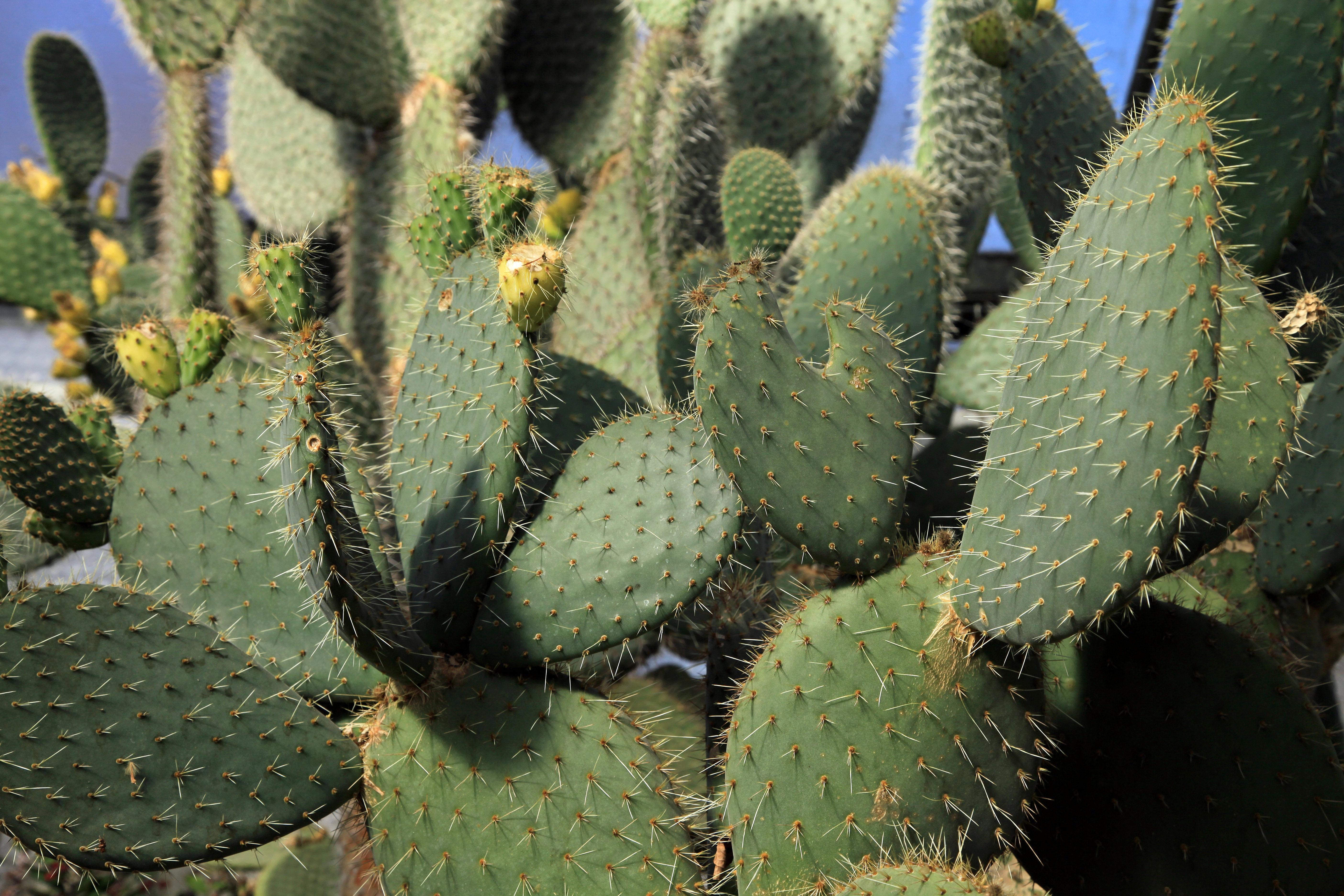 kostenlose foto kaktus gr n produzieren botanik. Black Bedroom Furniture Sets. Home Design Ideas