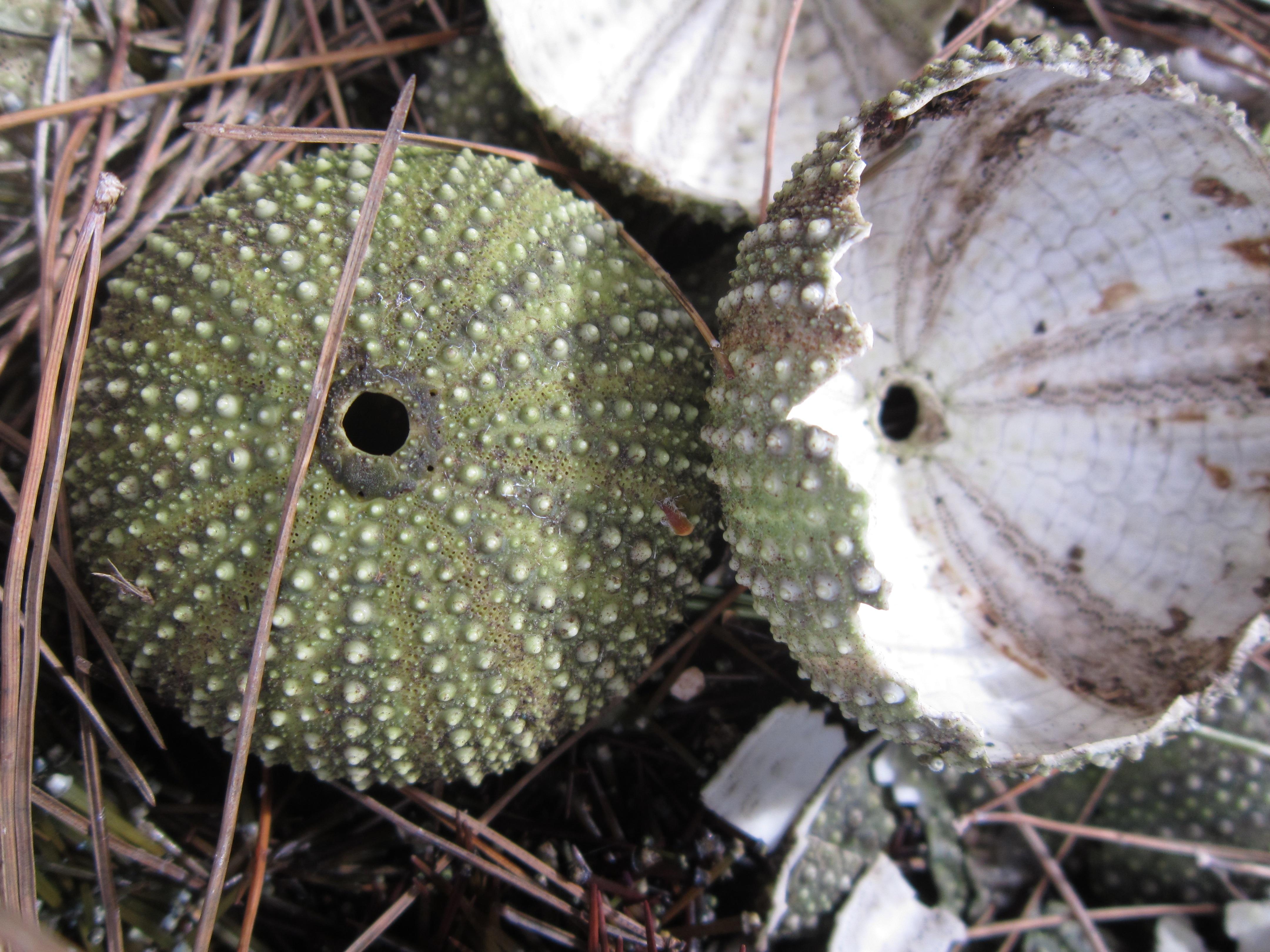 Kostenlose foto : Kaktus, Blatt, Blume, alt, produzieren, Rahmen ...