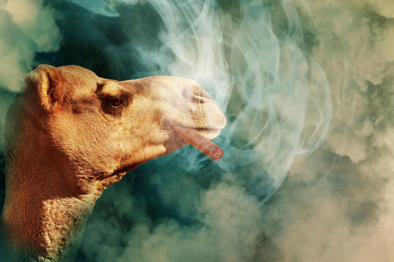 Free Images Cigar Smoke Cloud Smoking Tobacco Symbolic Enjoy