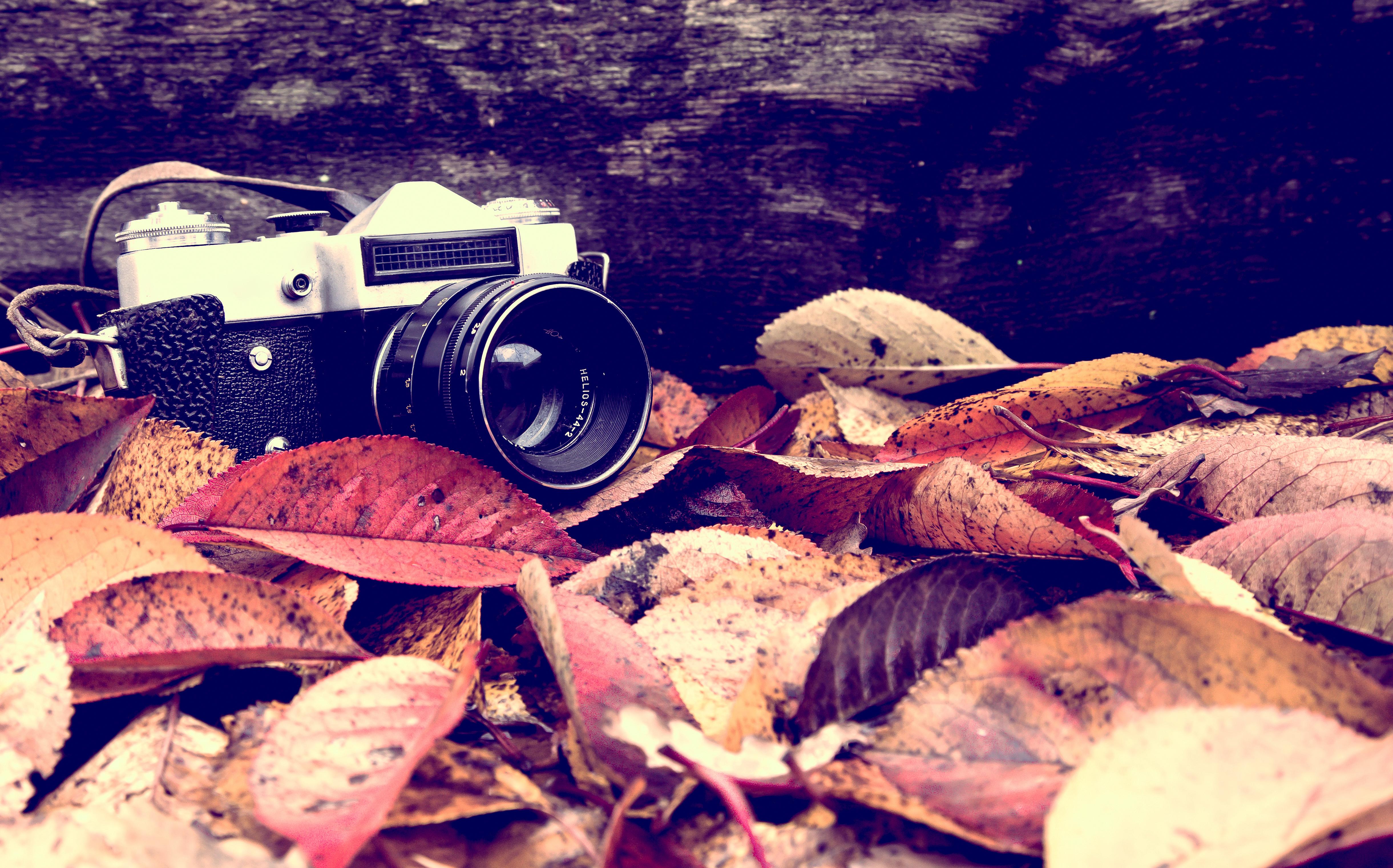 c55e3379 Bildet : kamera, blader, høst, arkivfotografi 4882x3041 - Vikysha ...