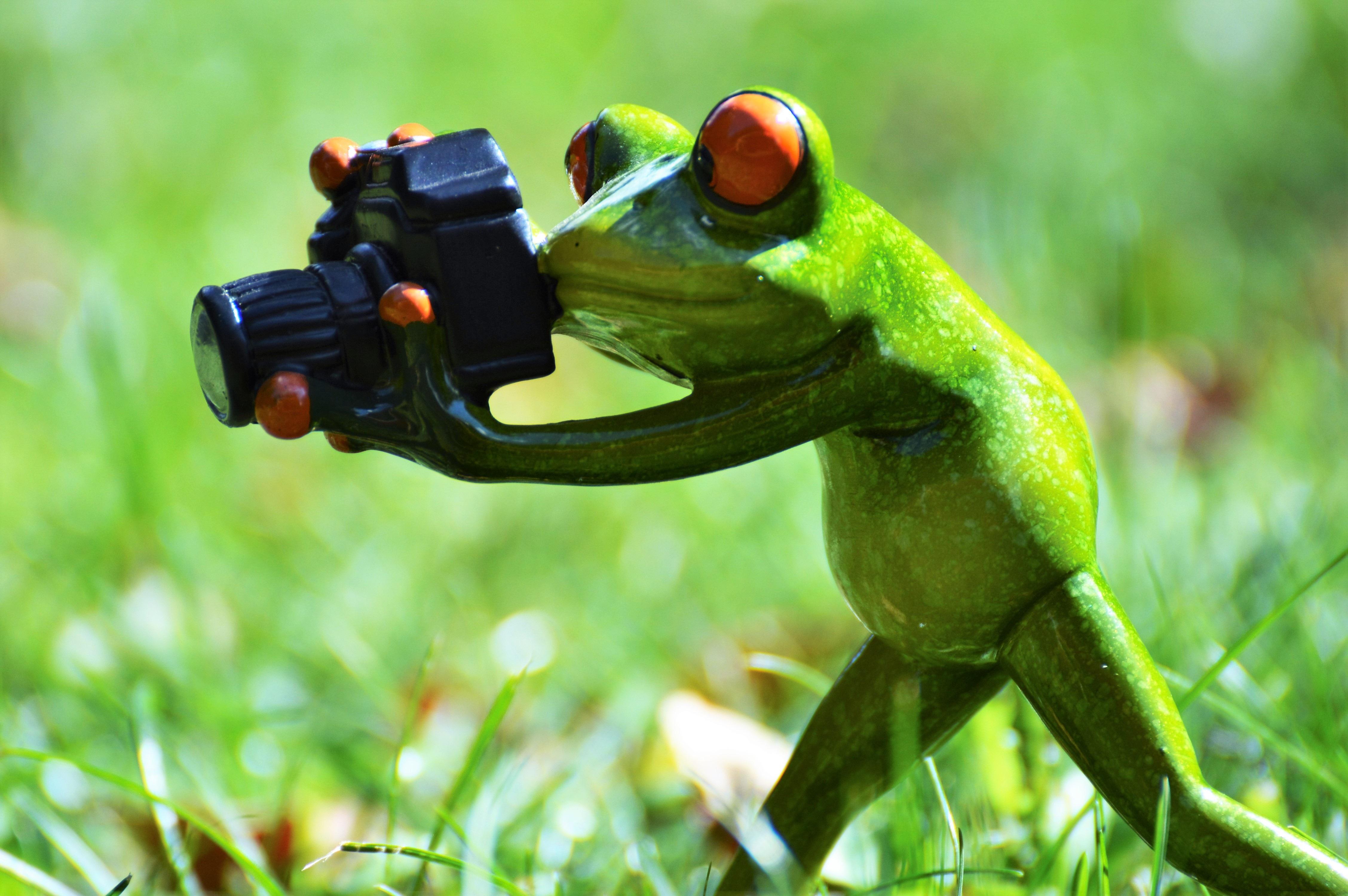 Populair Gratis Afbeeldingen : camera, fotograaf, dier, wildlife, groen #BW56