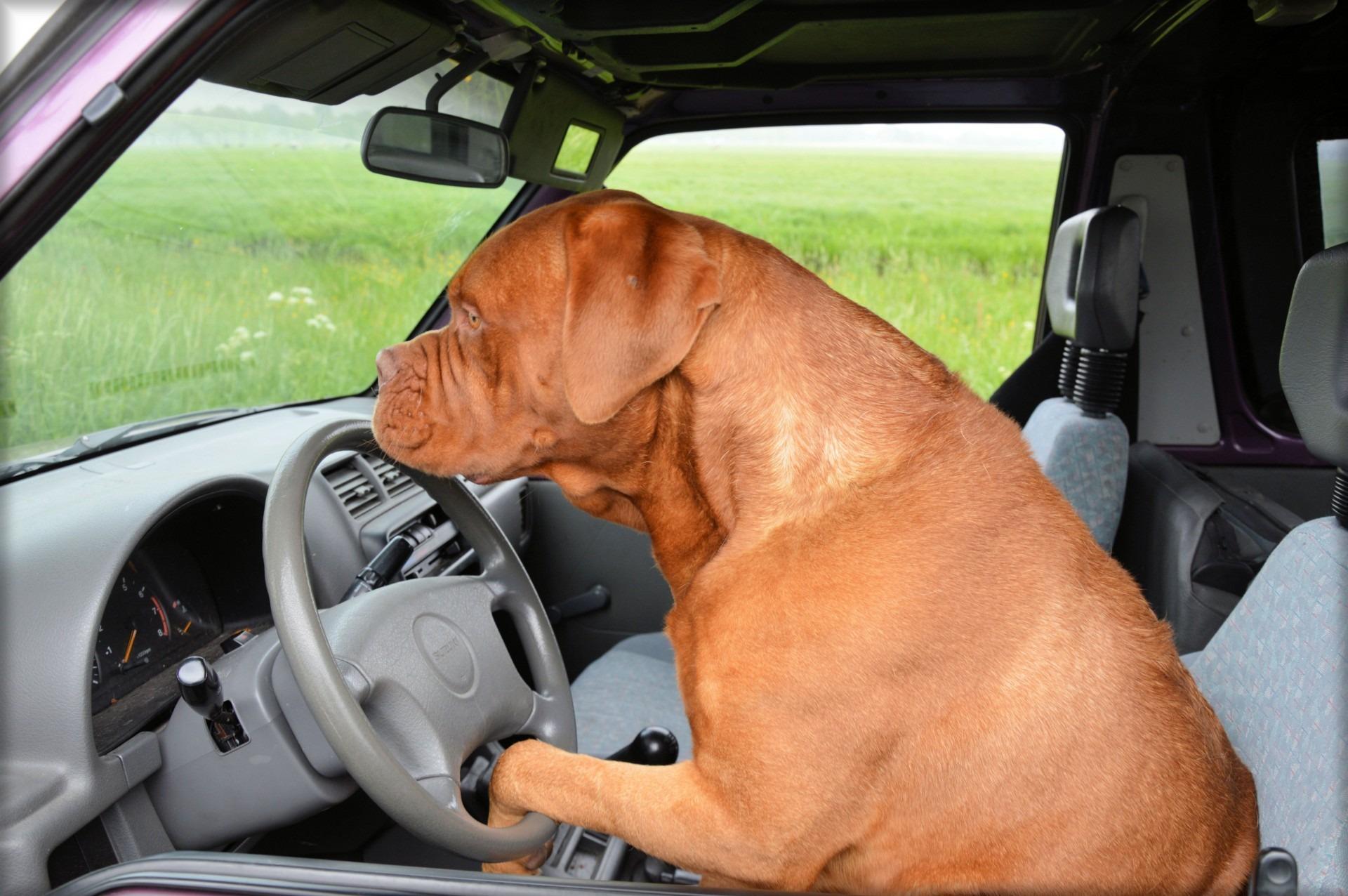 имеется картинки фото животных машин меня