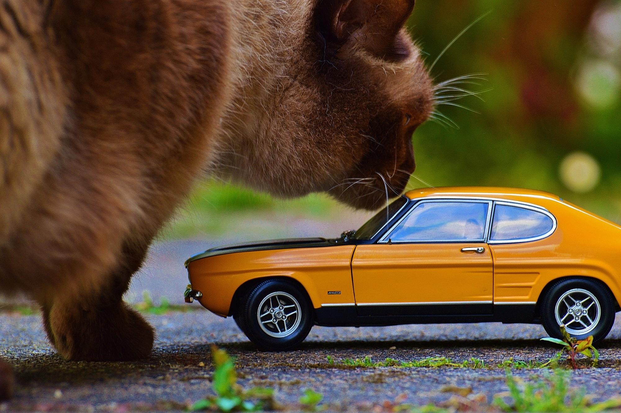открытка кот в машине артиста рассмешила данная