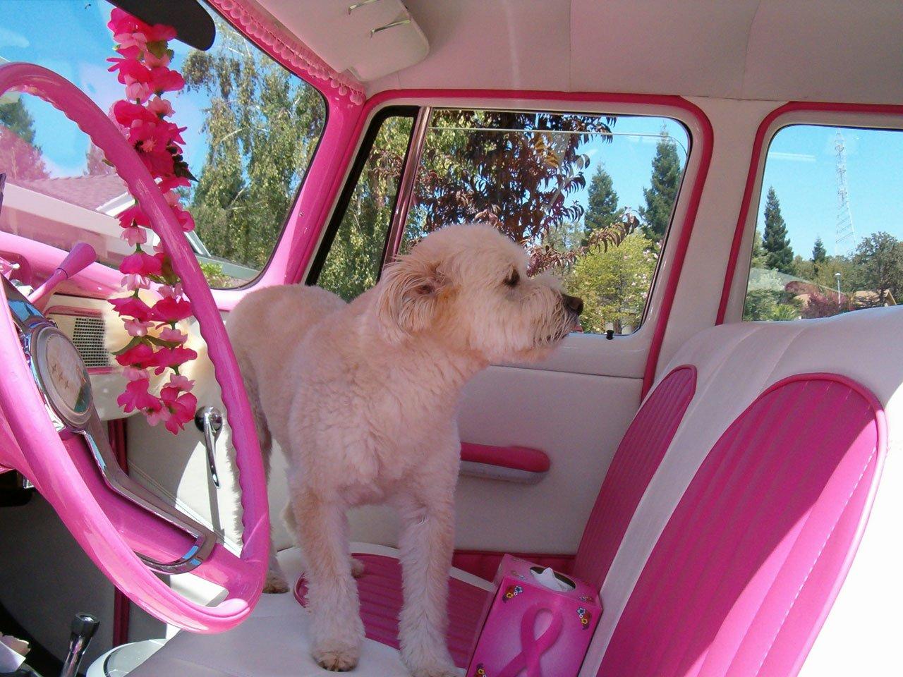 Free Images Car Retro Flower Interior Cute Pet Ride Decor