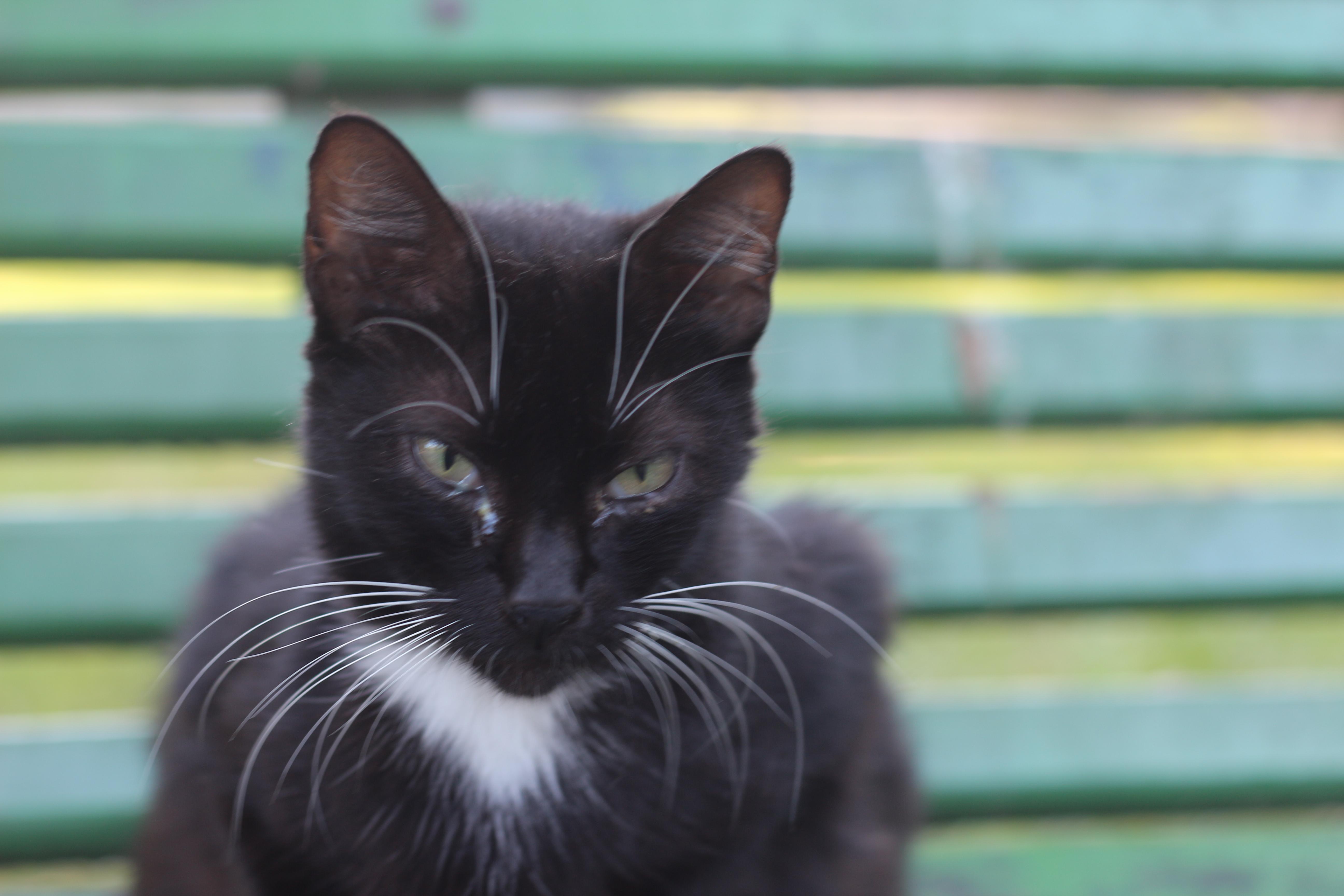 čierna mačička šírenie pic veľký péro Gangbang trubice