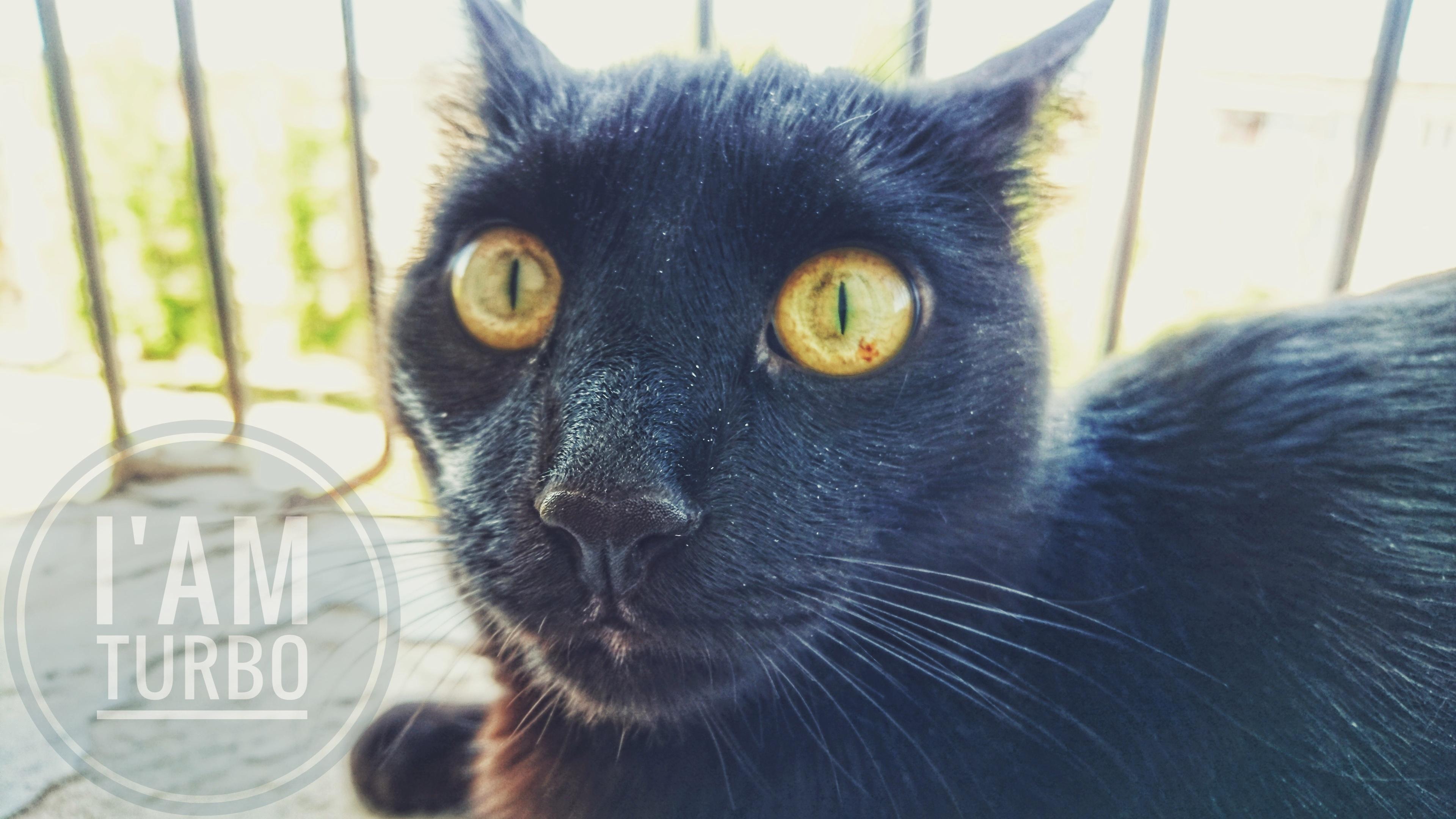 vlasy čierna mačička