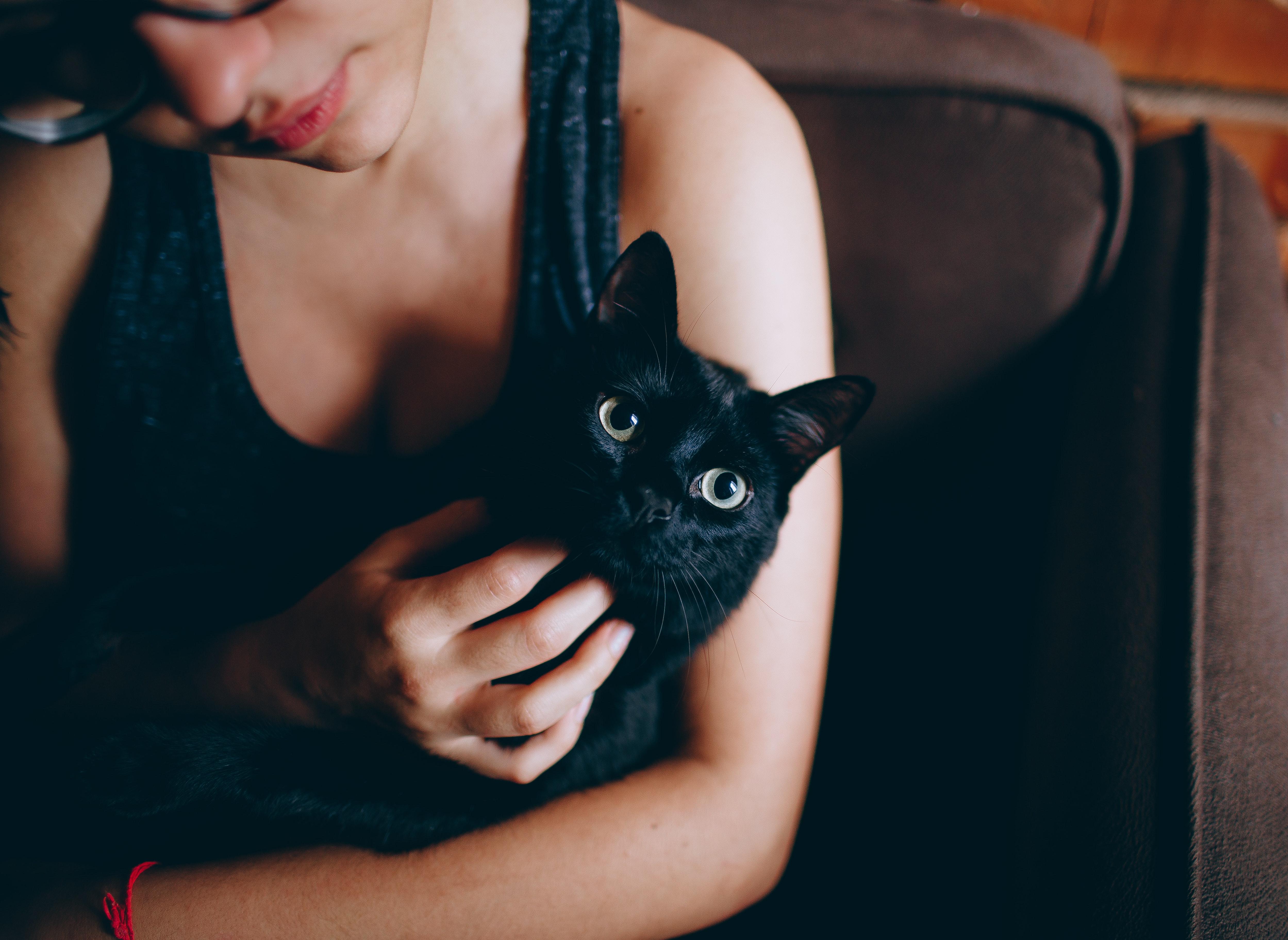 Блондинка с черным котом картинки