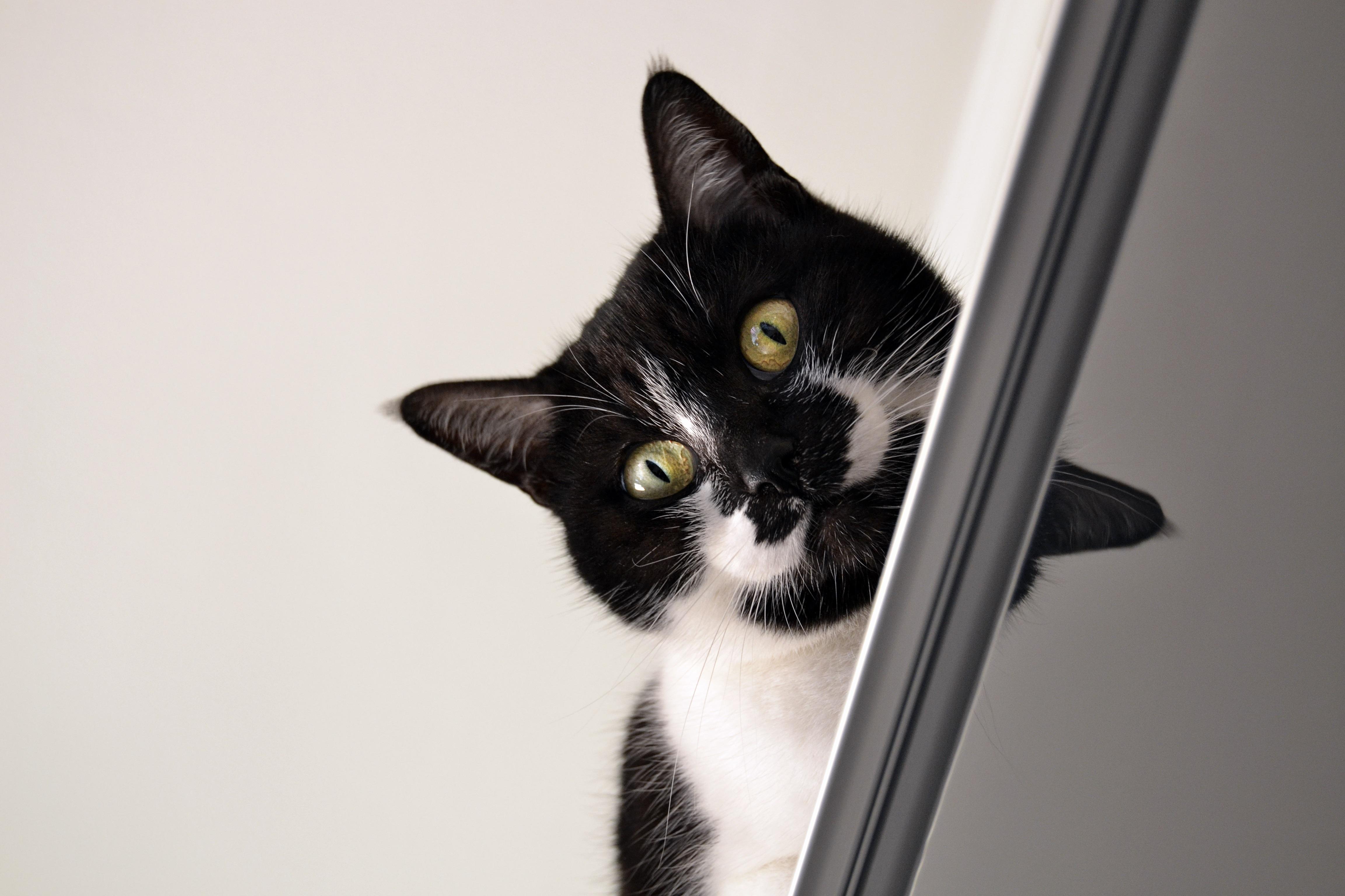 Vnútri čierna mačička