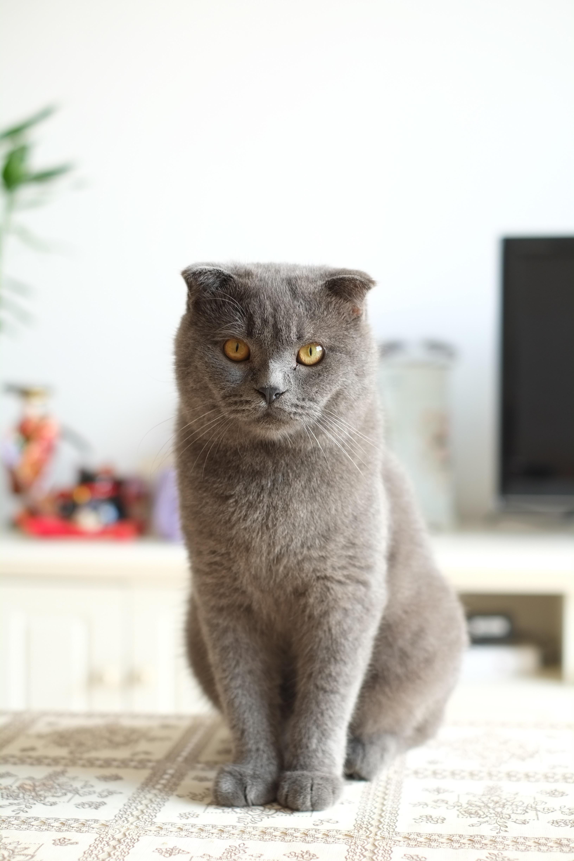 Hot Veľká mačička pic