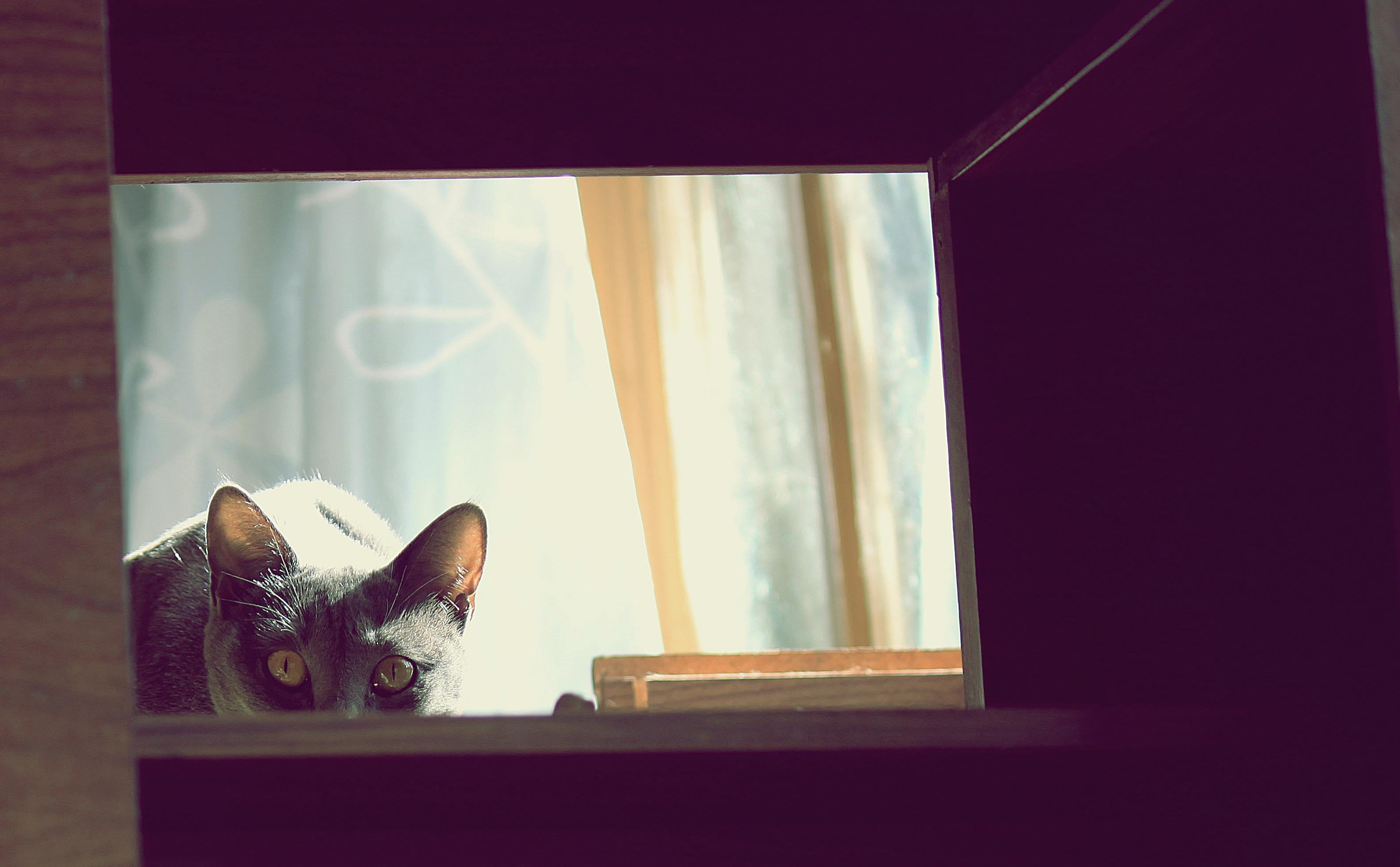 Kostenlose foto : Katze, Farbe, katzenartig, Innenarchitektur ...