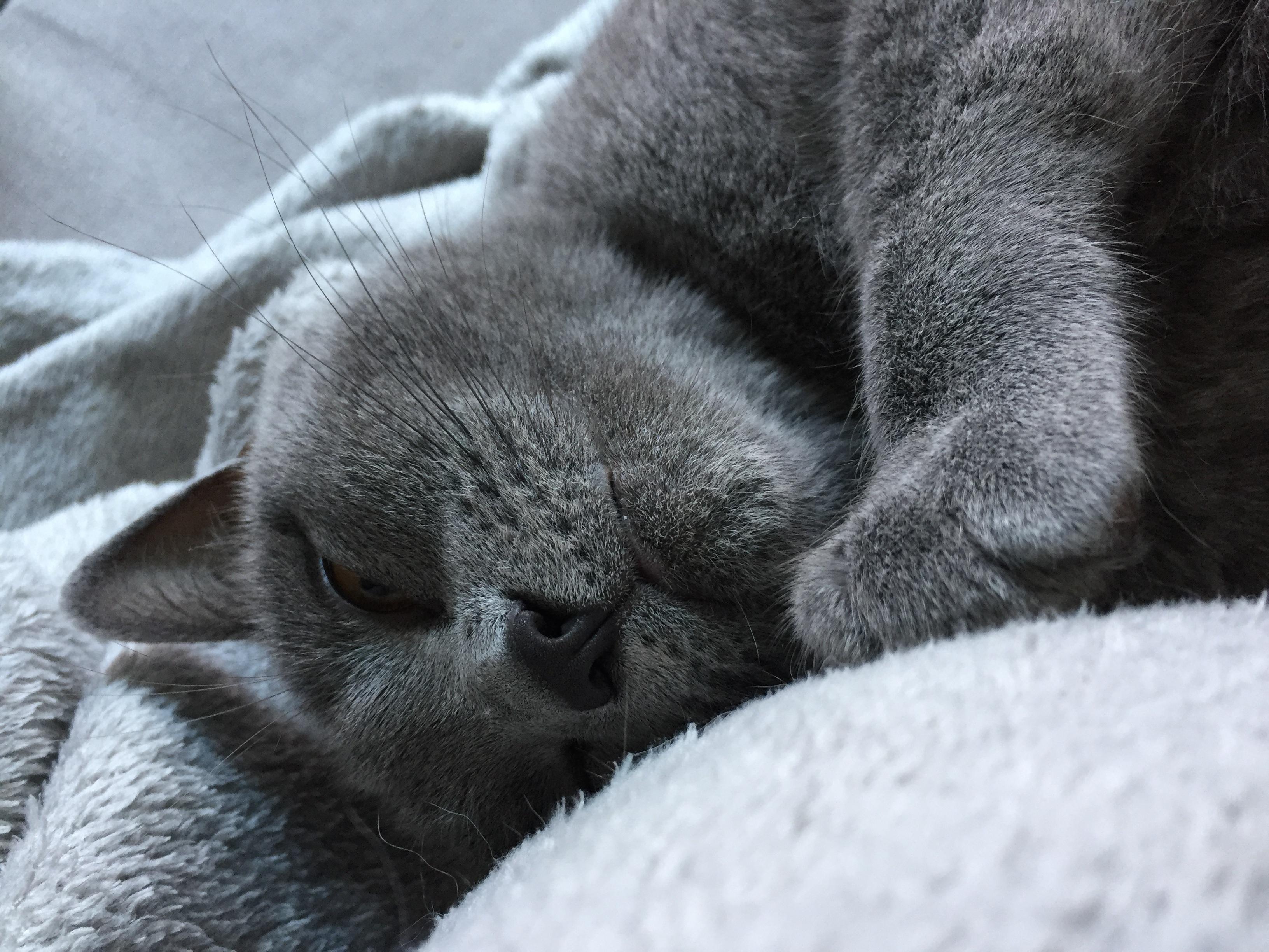 Сплю картинки красивые