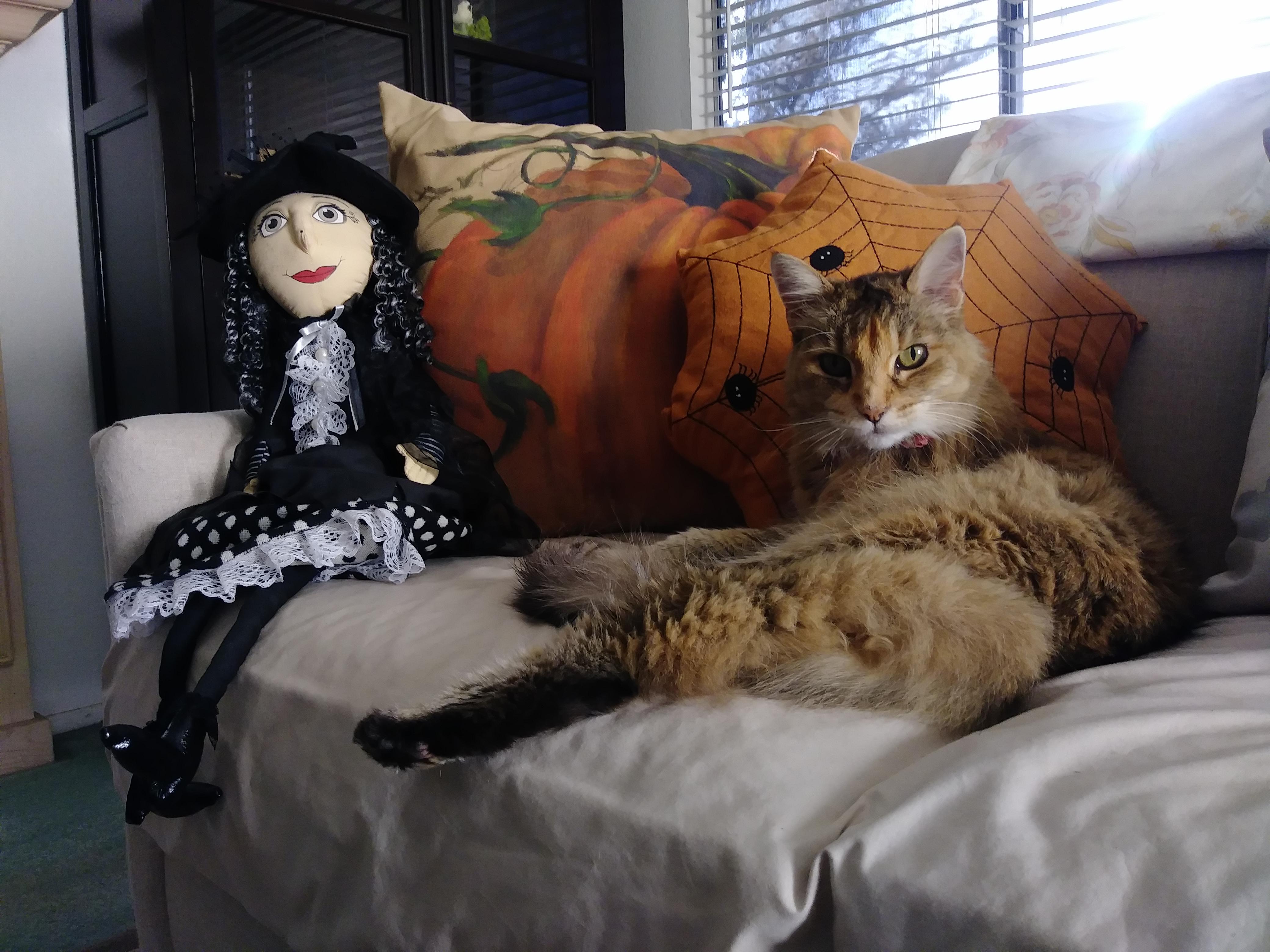 Fotos gratis : gato, Víspera de Todos los Santos, bruja, fiesta ...