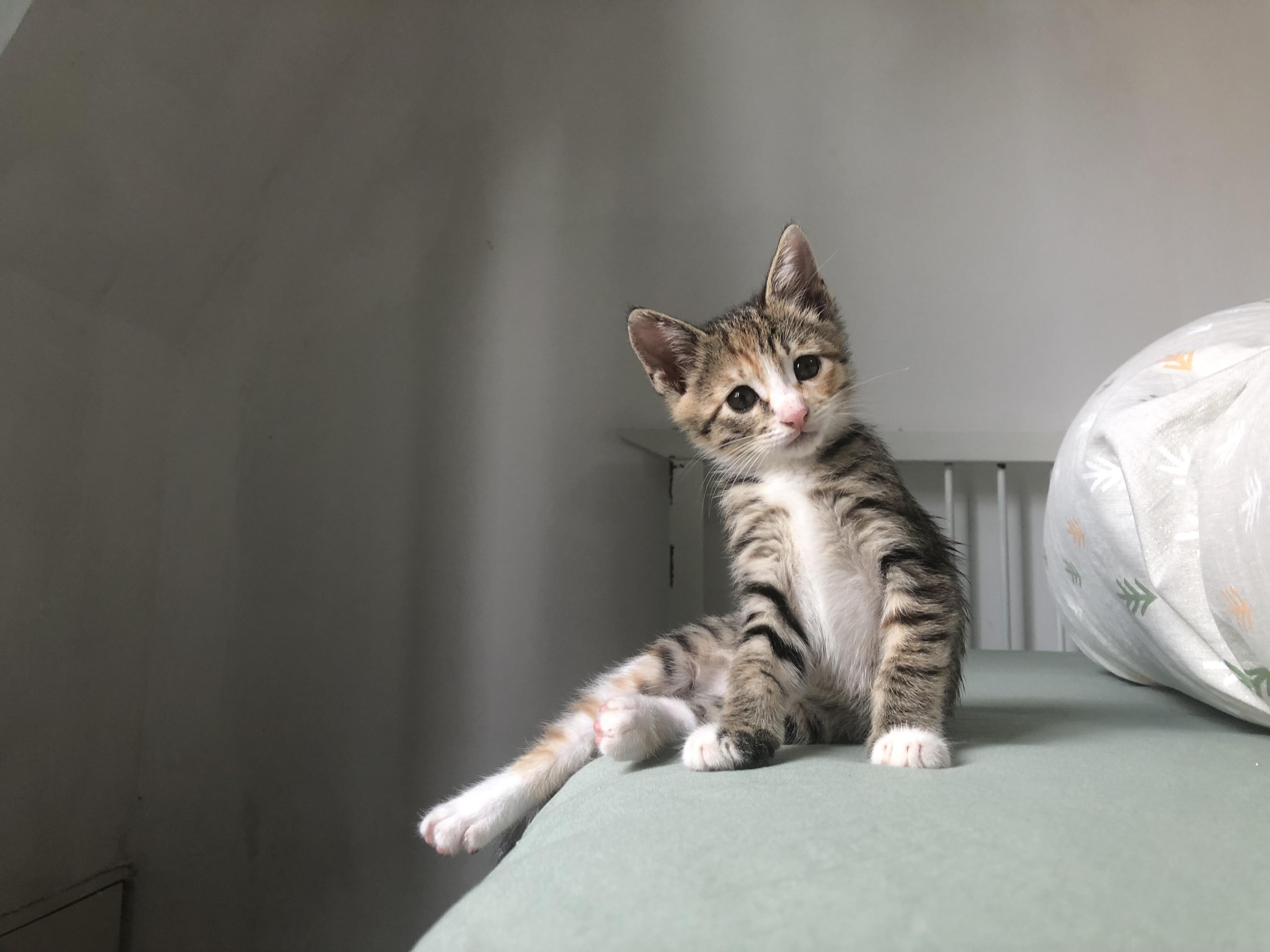 Gambar Anak Kucing Imut Binatang Menyusui Bertulang