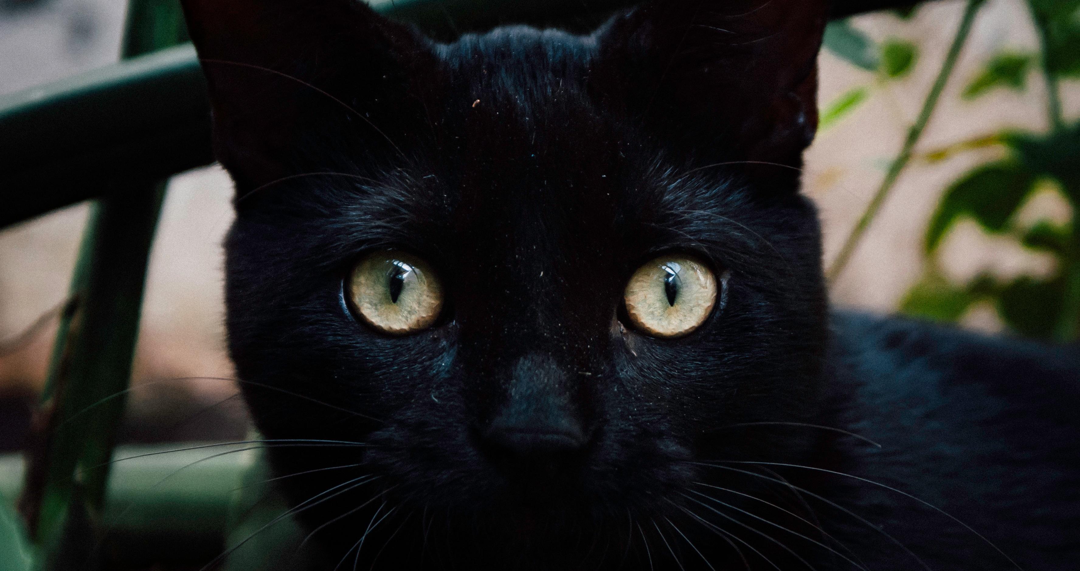 Stiahnite si zdarma túto fotografiu o Mačka Čierna Mačacie Oči z Pixabay knižnice public domain obrázkov a videí.
