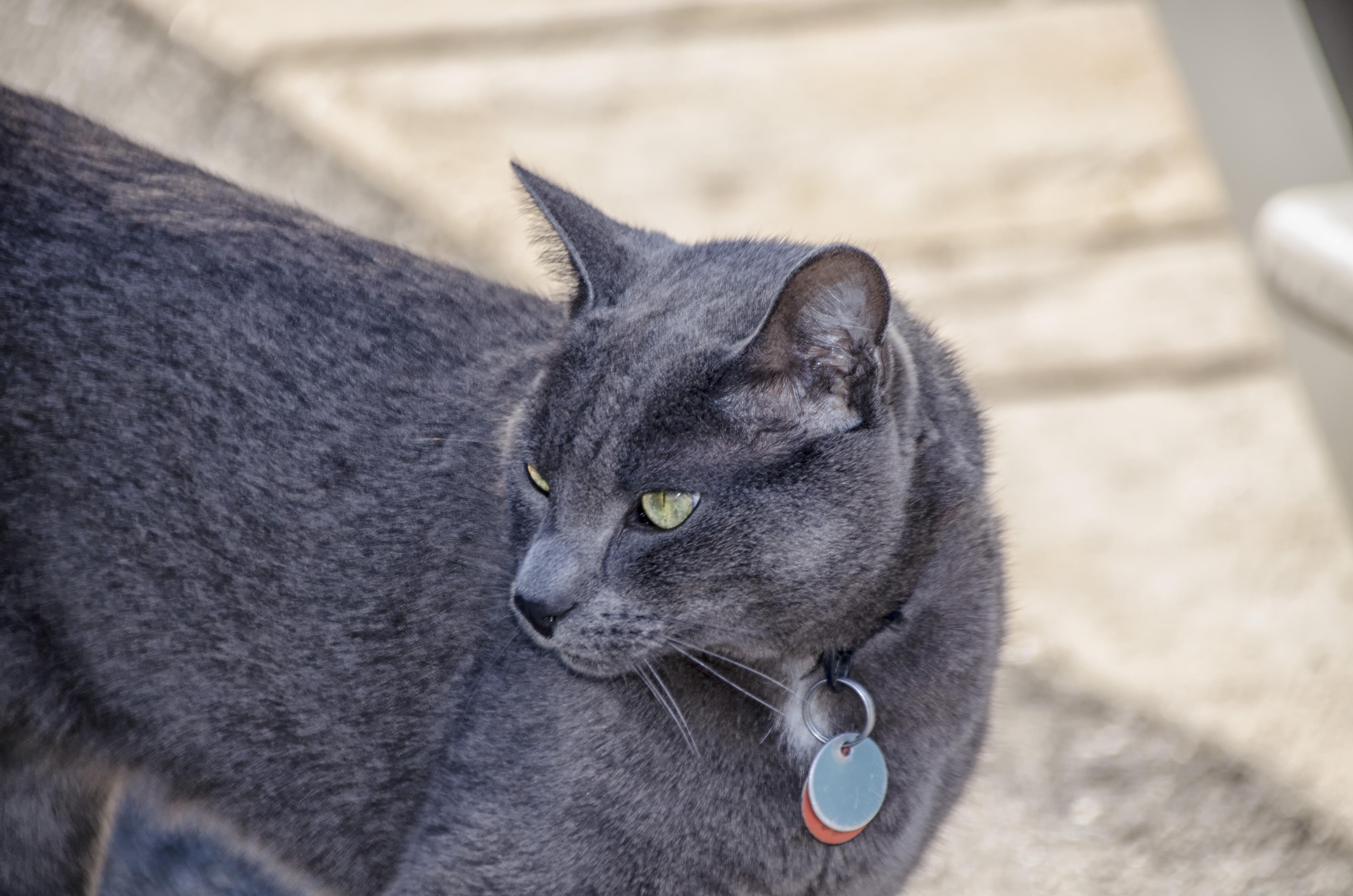 hrubé čierne chlpaté mačička pics