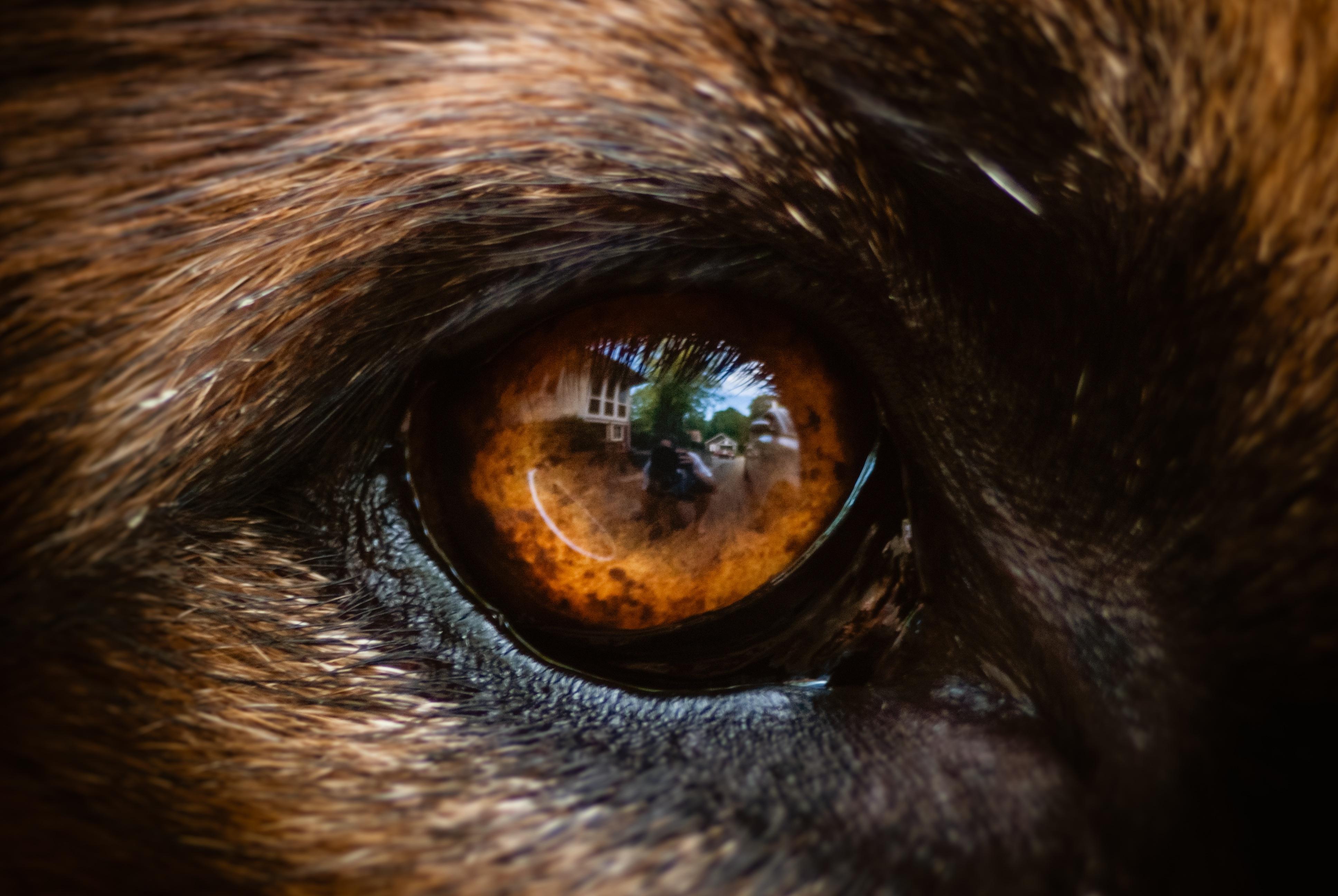 Картинки гипноза для глаз издания