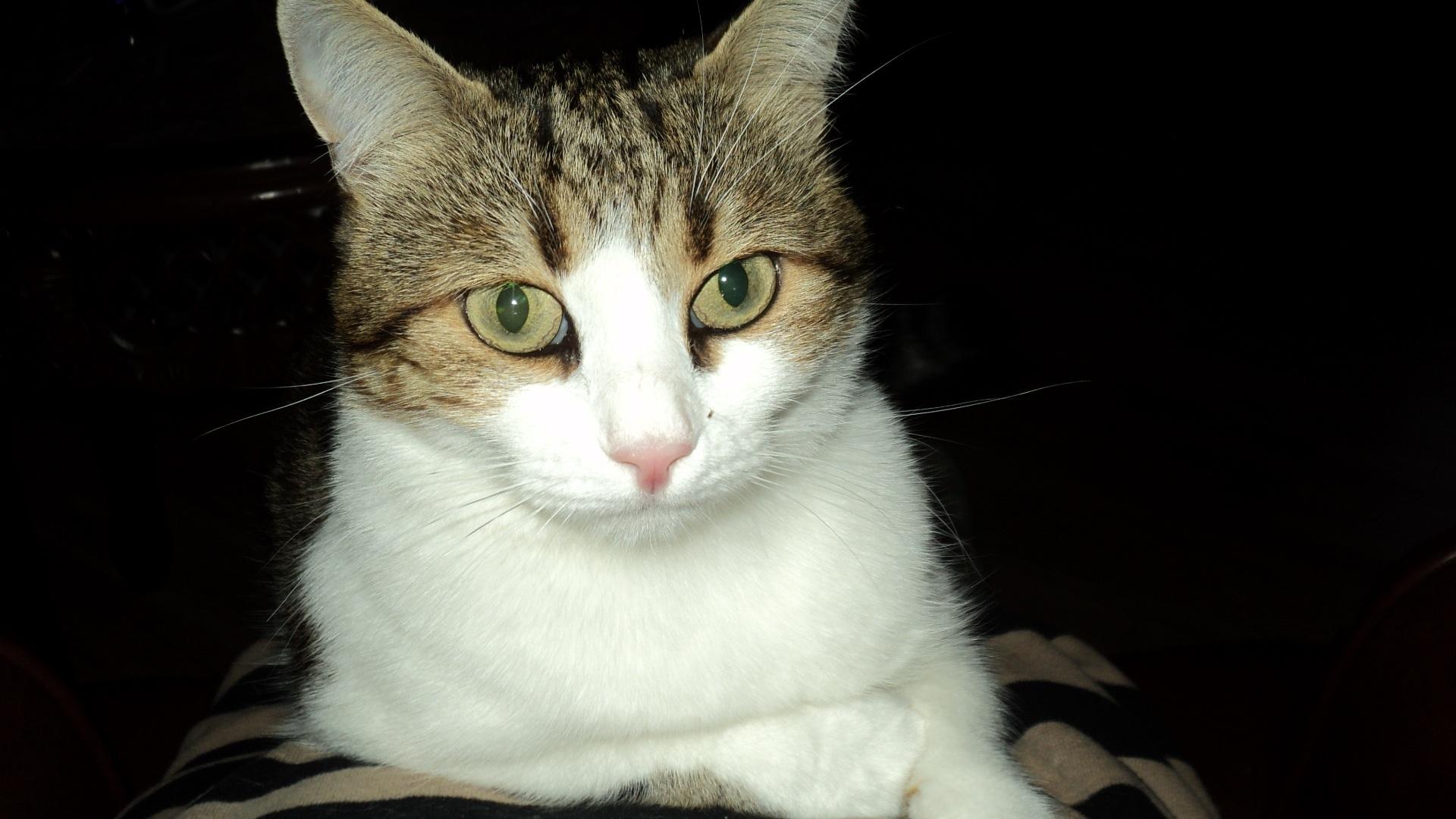 mačička v HD