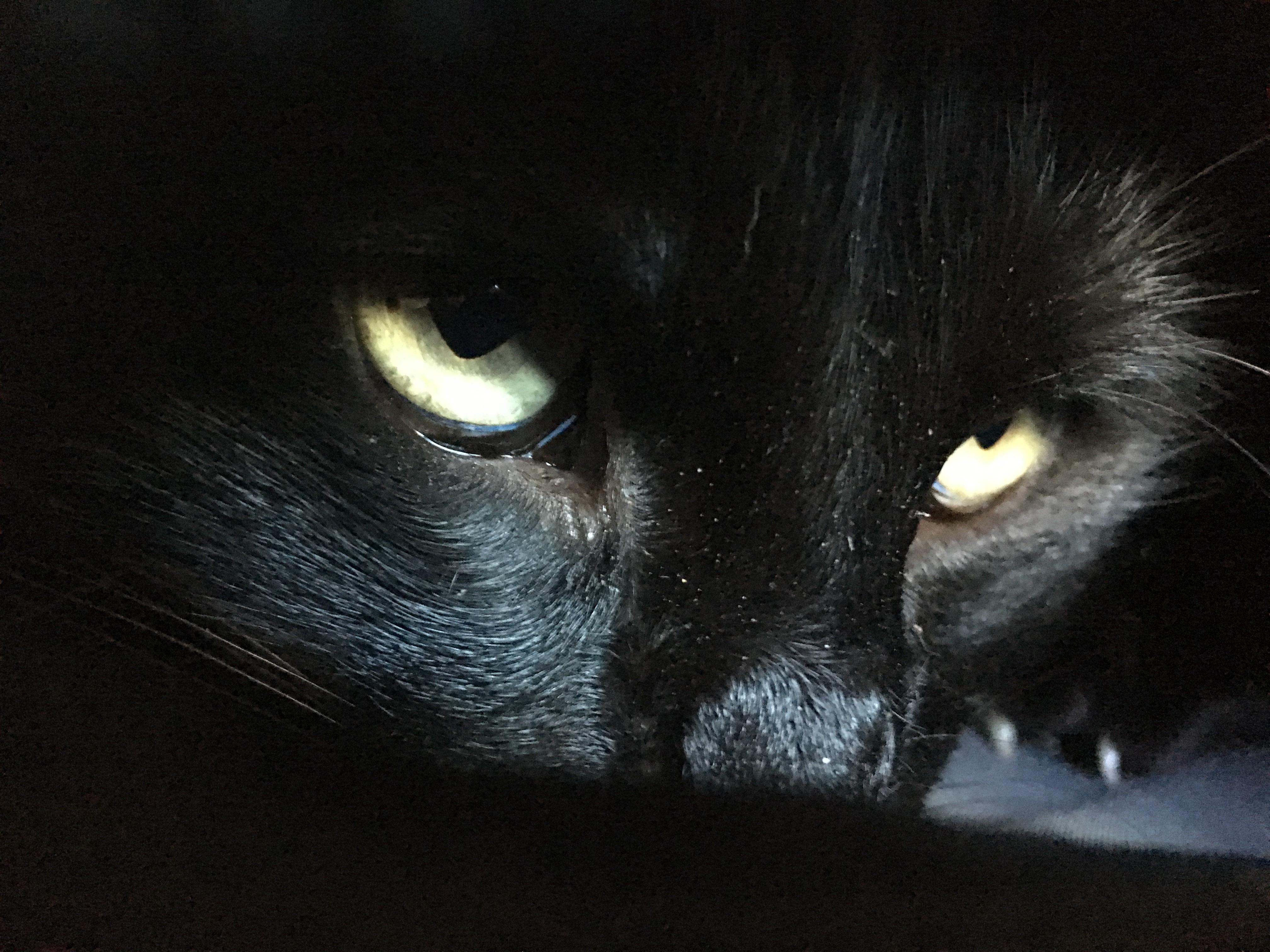 планируется картинки глаз черной кошки ожившие предметы