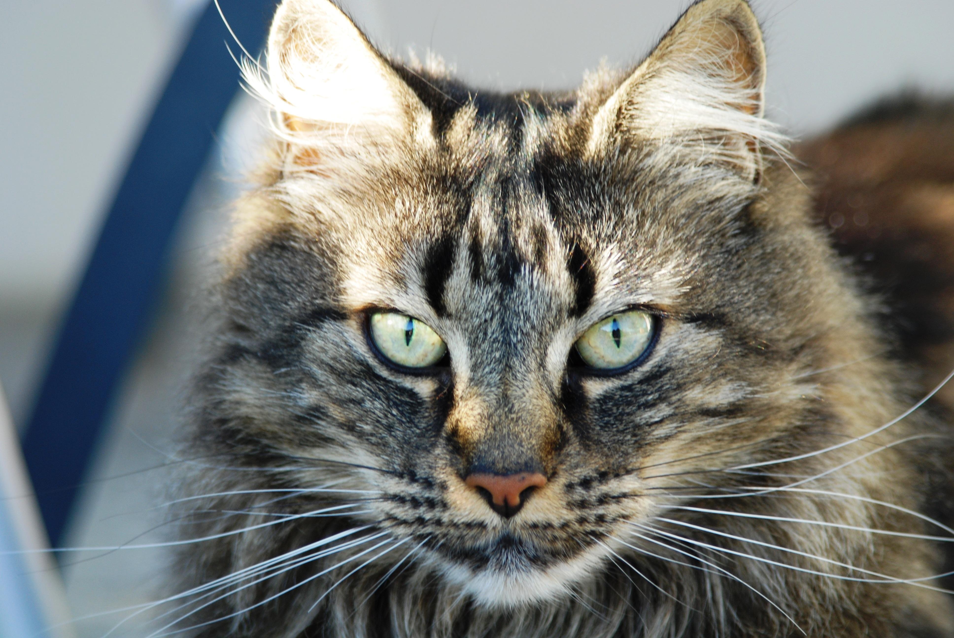 Gif Anim Cat Wild