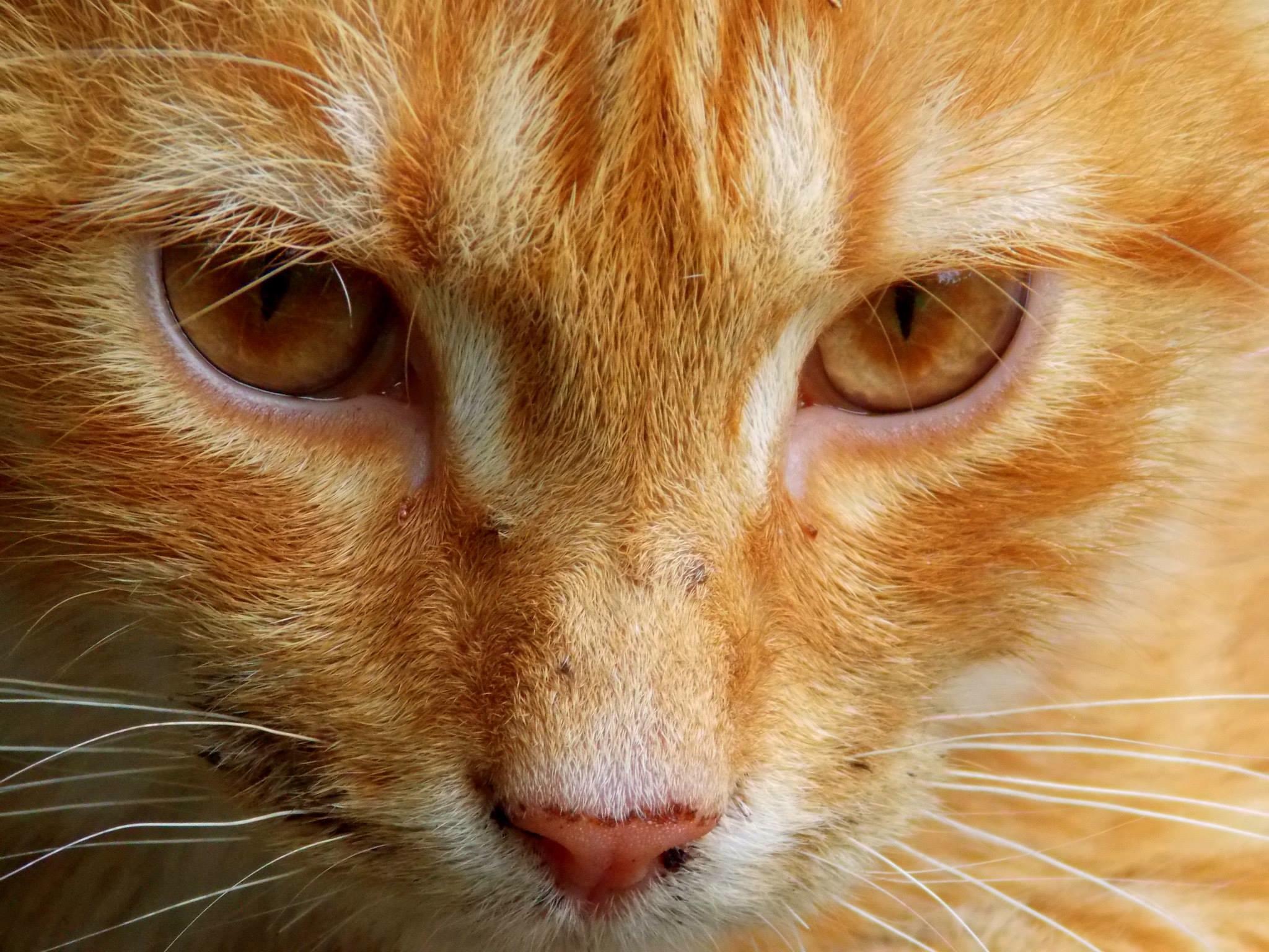 Darmowe Zdjęcia Fauna ścieśniać Nos Wąsy Pysk Oko Kręgowiec
