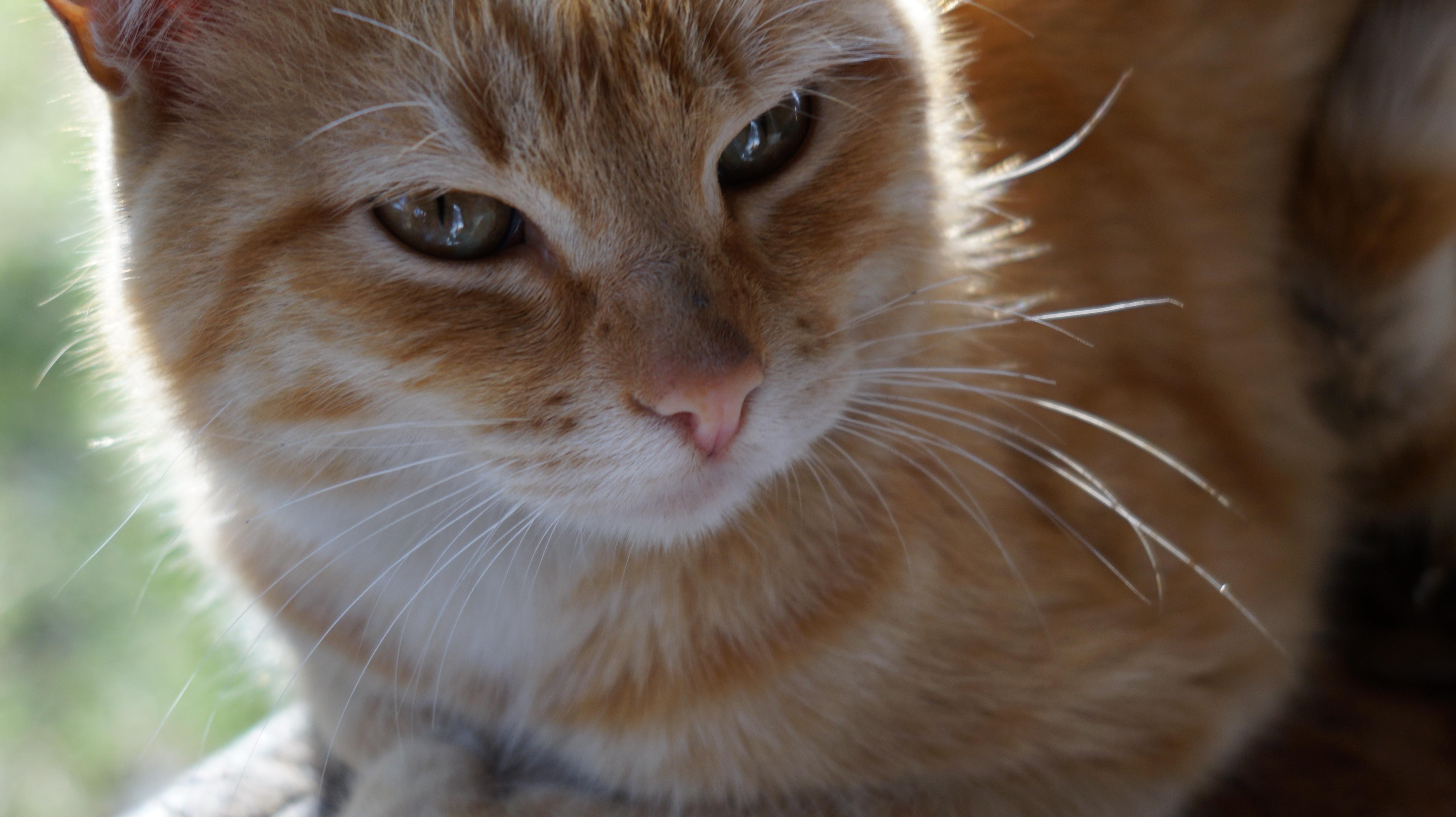 Darmowe Zdjęcia Fauna ścieśniać Nos Wąsy Pysk Skóra