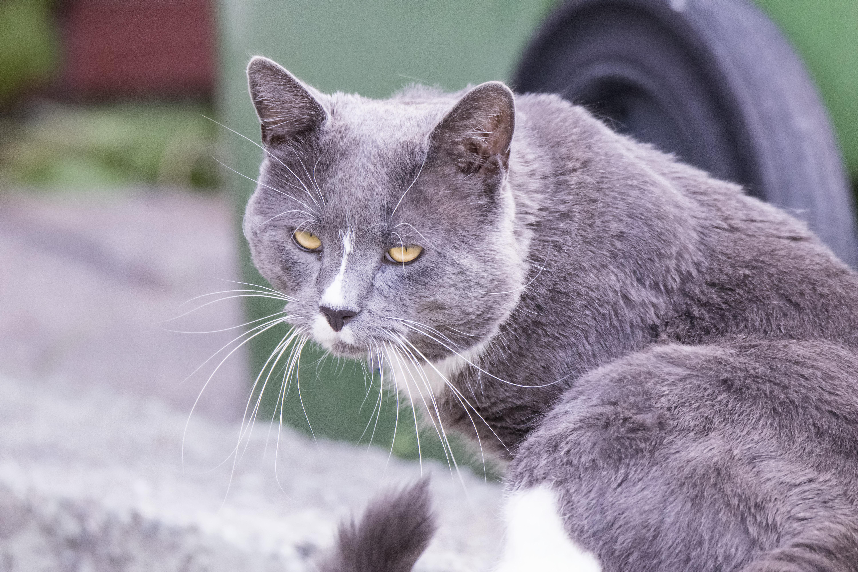 c5e89e711f10 εικονεσ   Γάτα