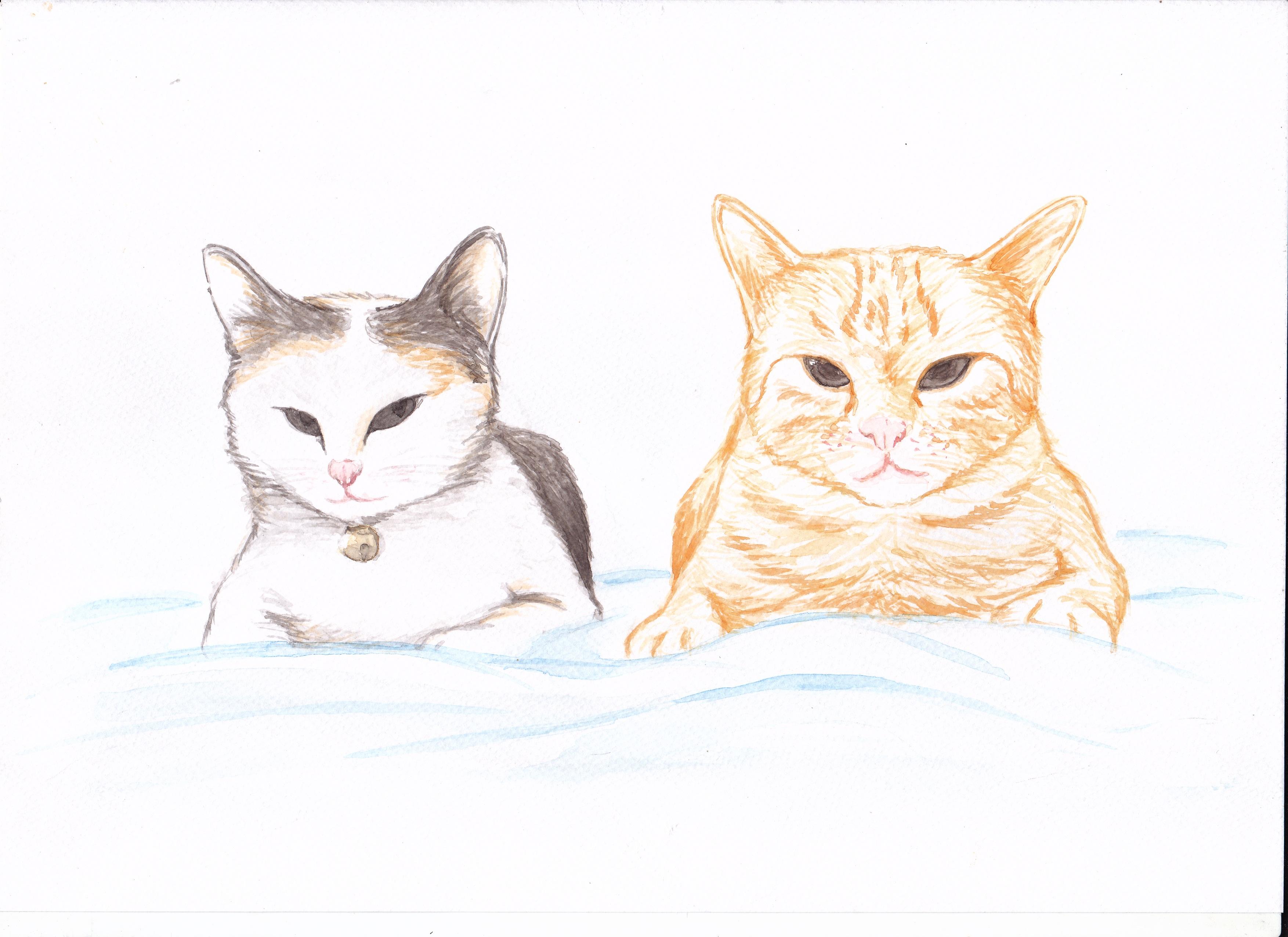 Gambar Binatang Menyusui Lukisan Sketsa Ilustrasi Pasangan