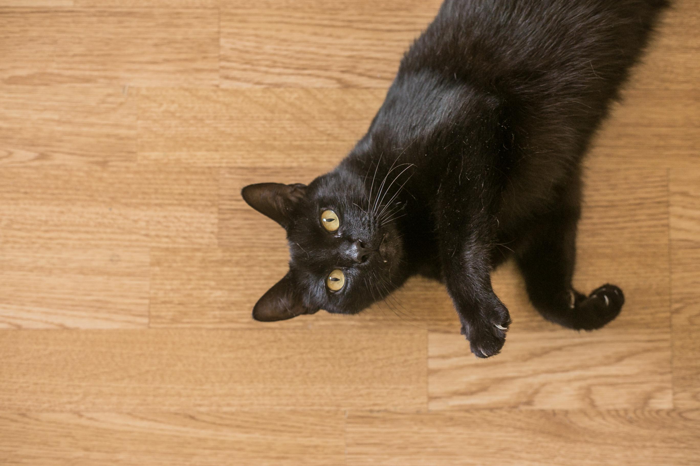 čierna mačička a zadok