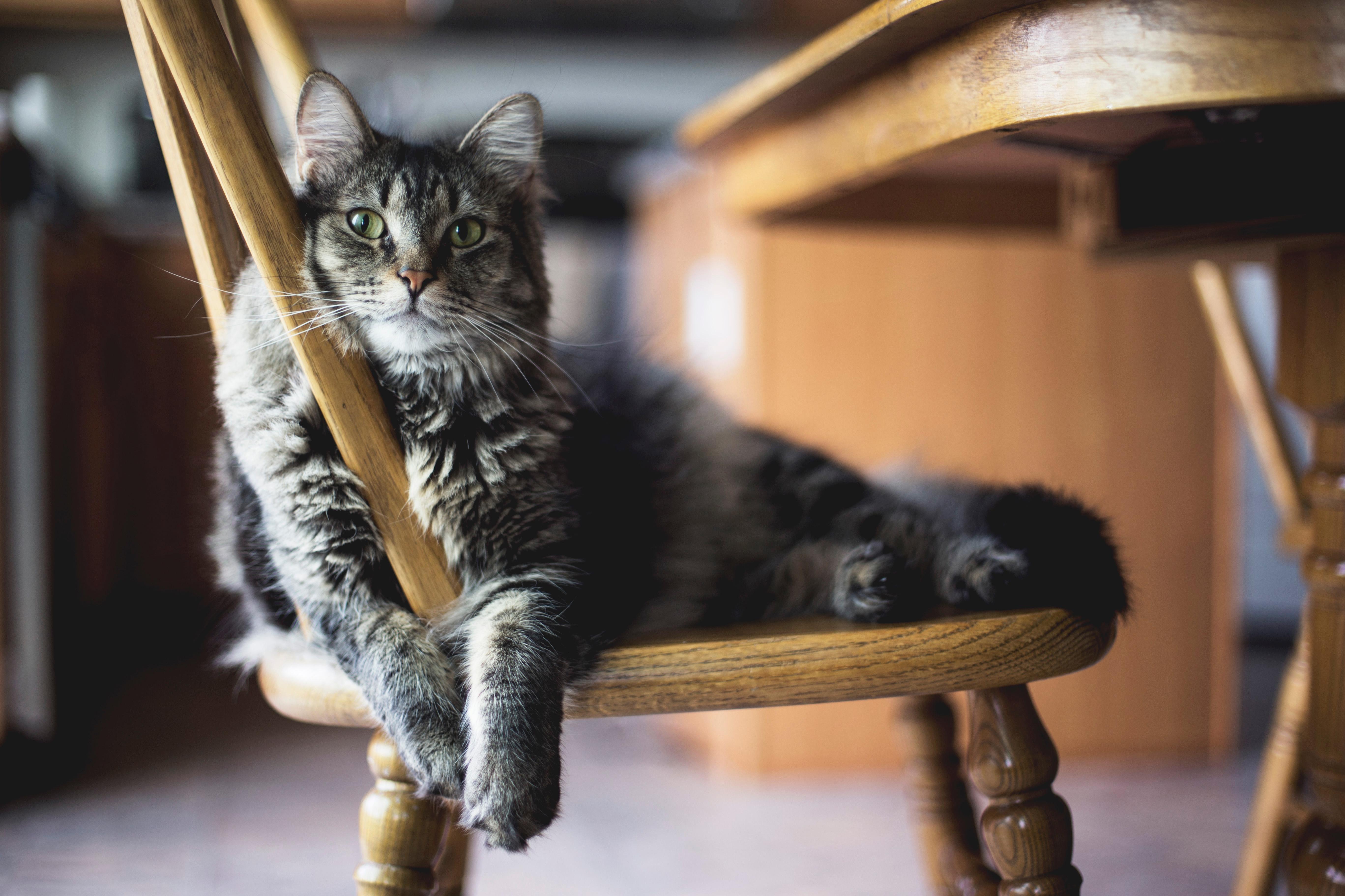 картинки котята сидят желании можно