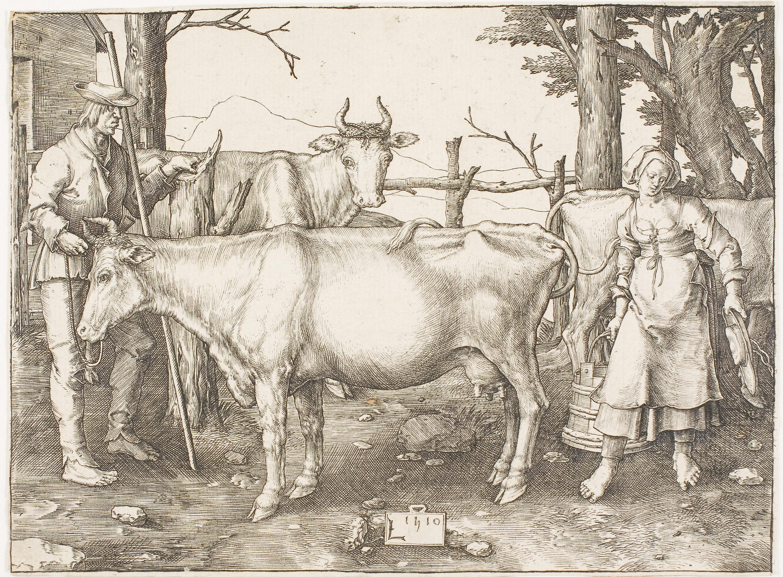 Gambar Ternak Seperti Mamalia Fauna Tanduk Pohon Lembu