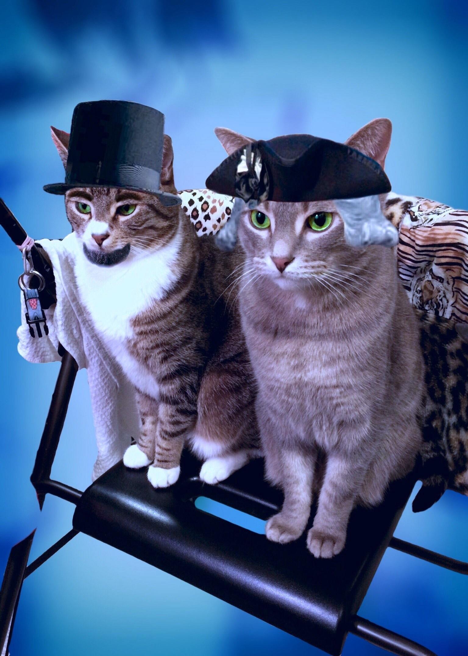 Chat symbolique galerie tatouage - Symbolique du chat ...
