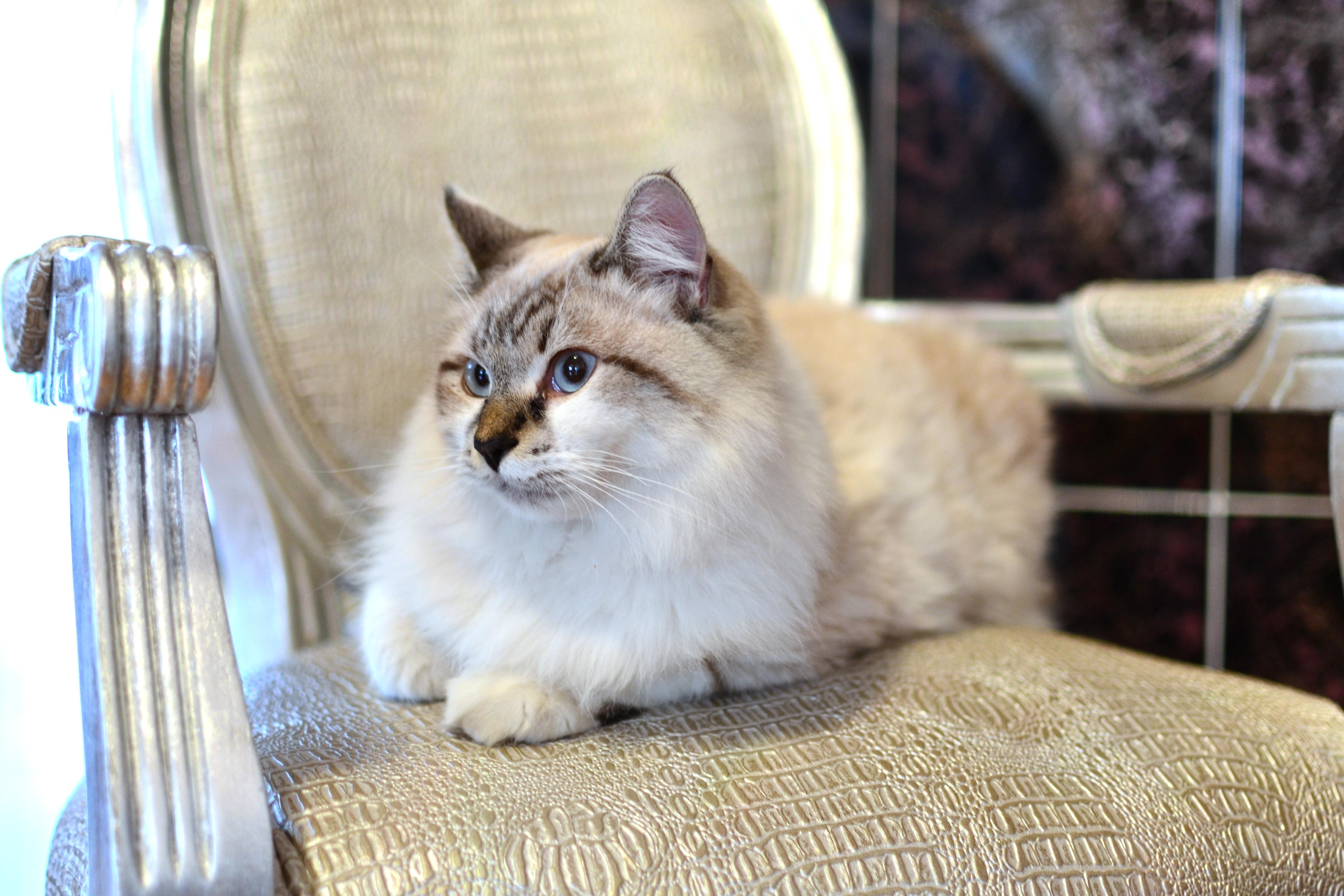 zadarmo veľké dievča mačička