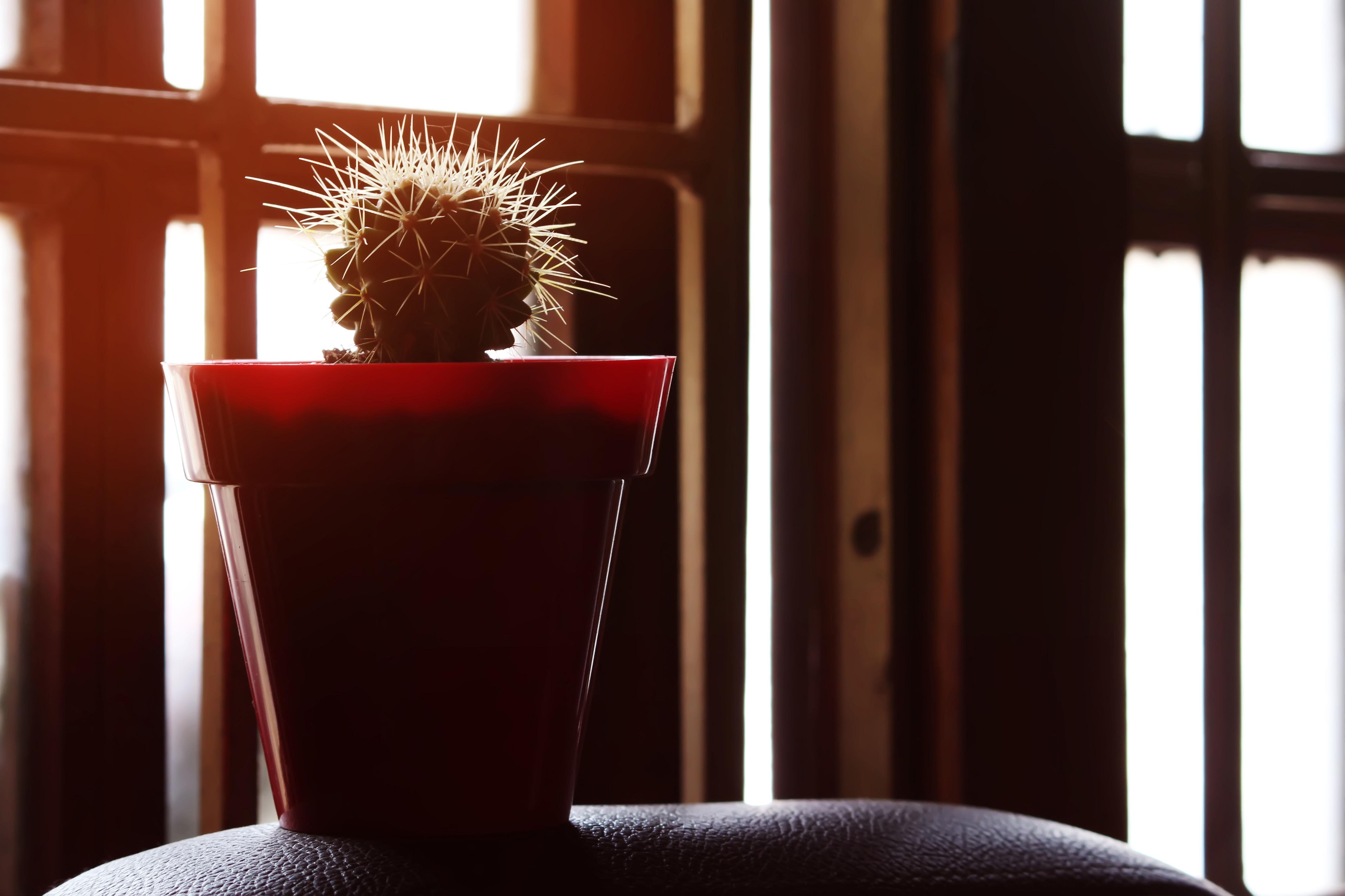 799027cca5dd stoličky Domov červená obývačka nábytok izbu osvetlenie interiérový dizajn  žalúzie okná