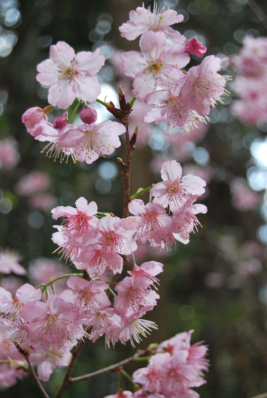цветение деревьев бело розовым цветом фото подходящую картинку книге