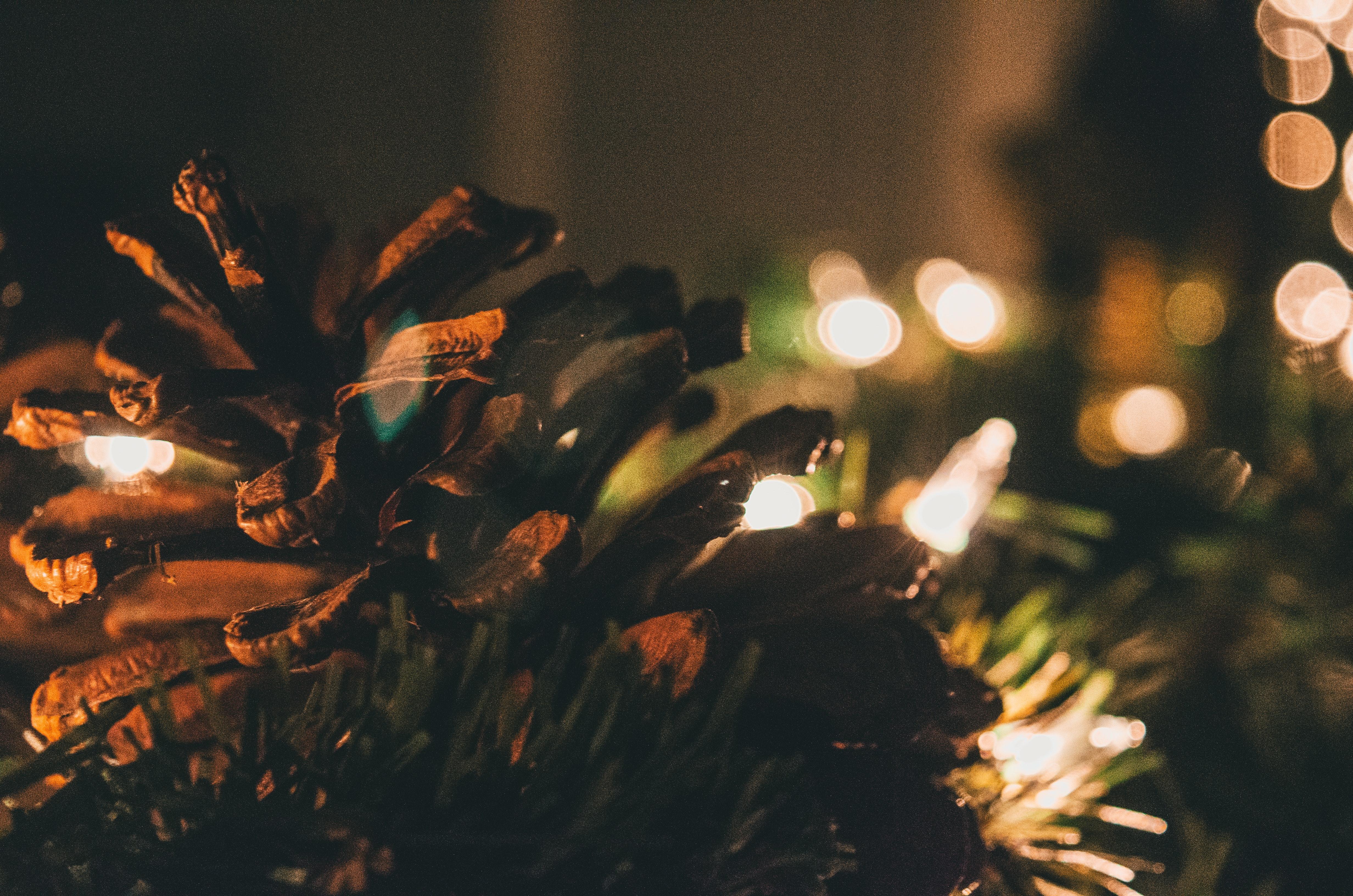 Weihnachtsbeleuchtung Tannenzapfen.Kostenlose Foto Weihnachten Weihnachtsdekor Weihnachtsdekoration