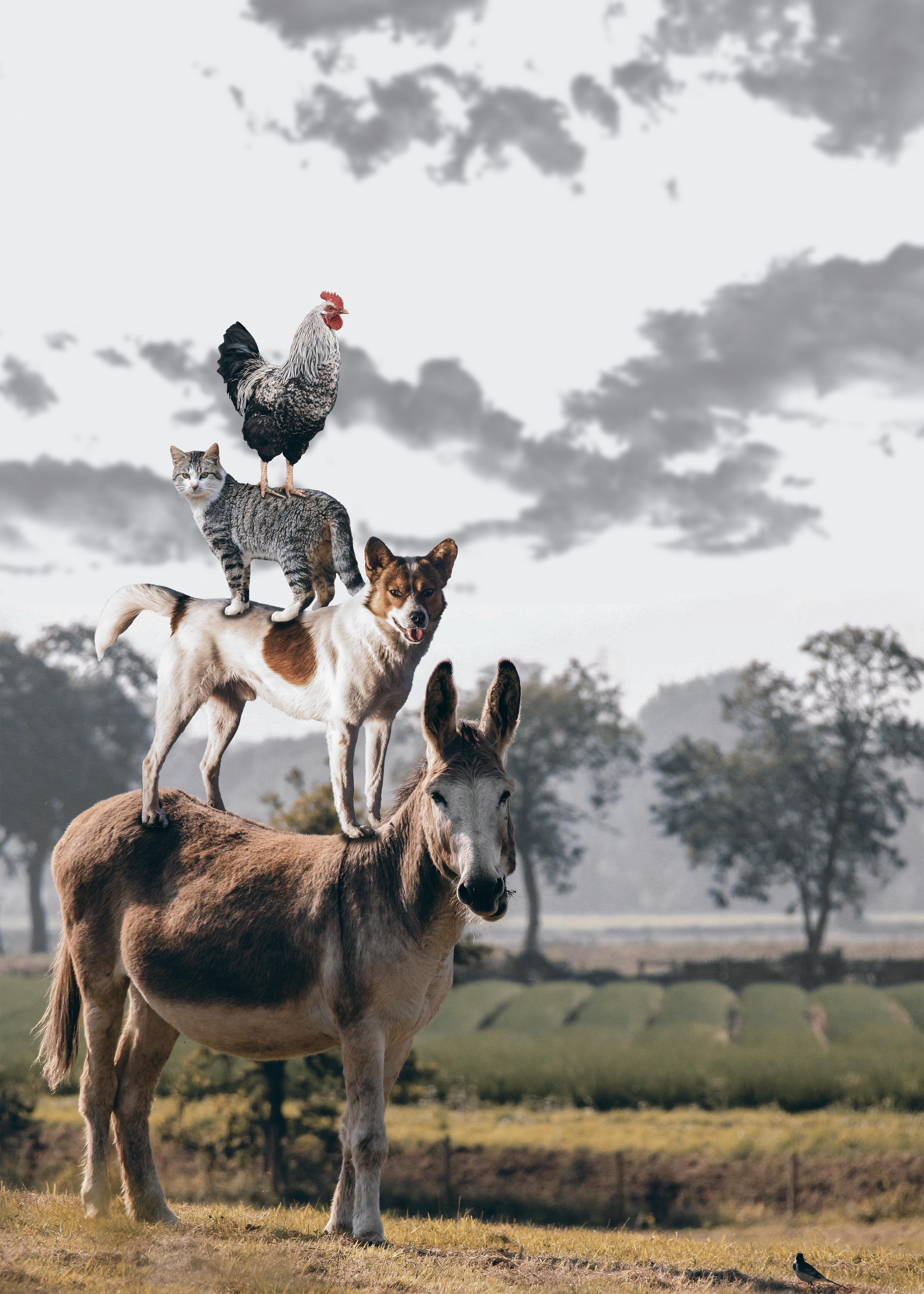free images city dog deer cat predator donkey sage