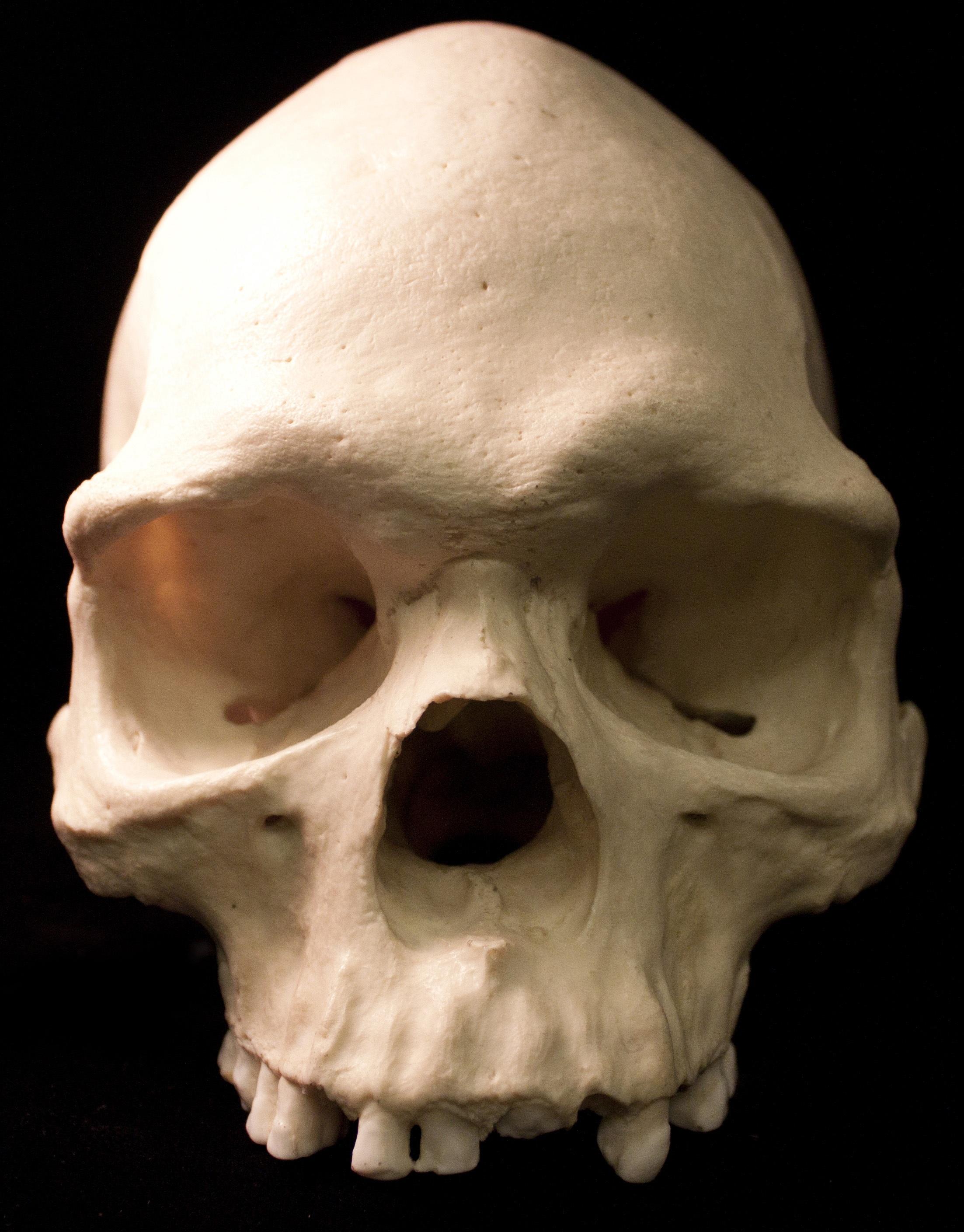 Free Images Clothing Death Skull Bone Face Sculpture Nose