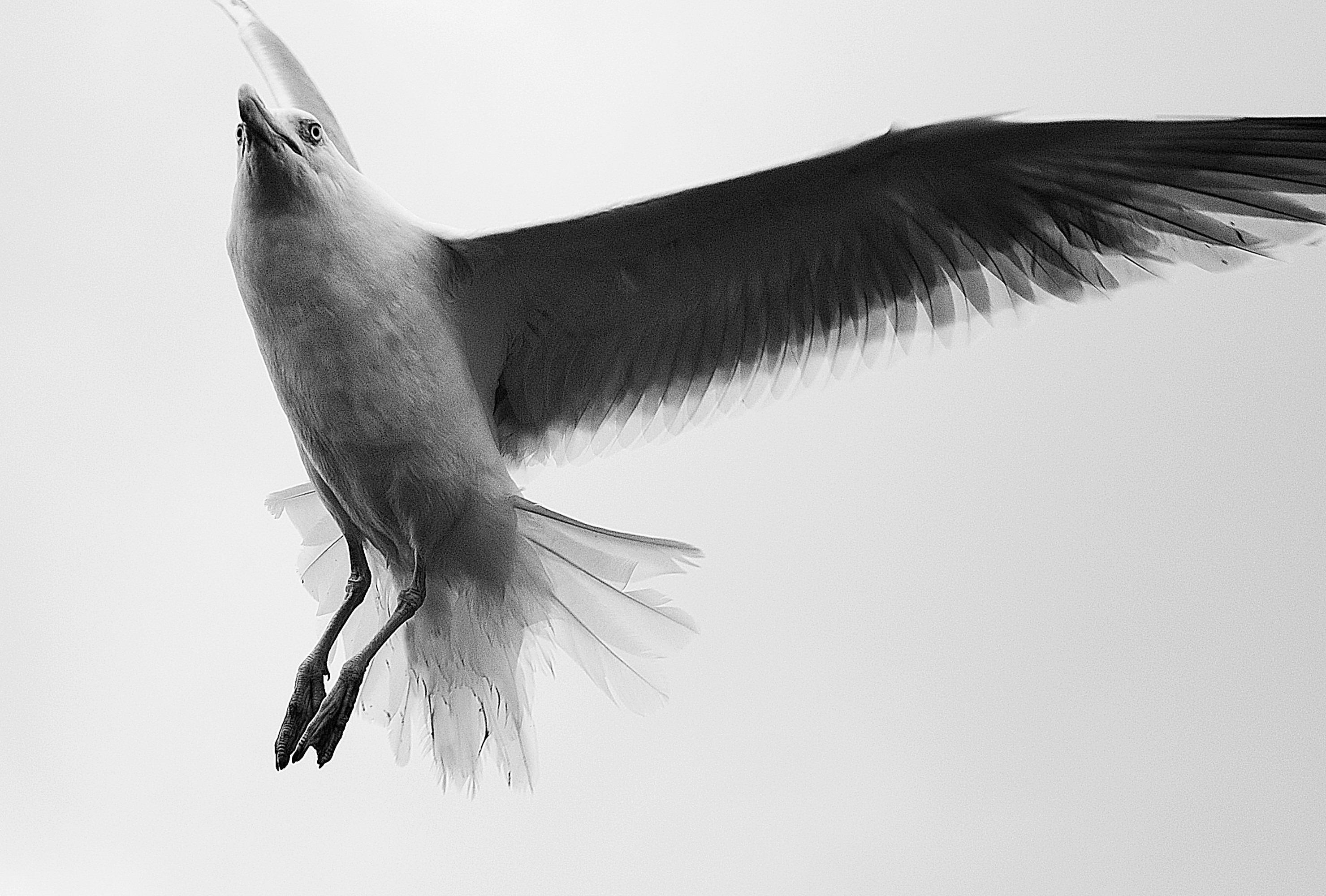 фотоснимки черно белые картинки птицы из спины авторами стояла задача