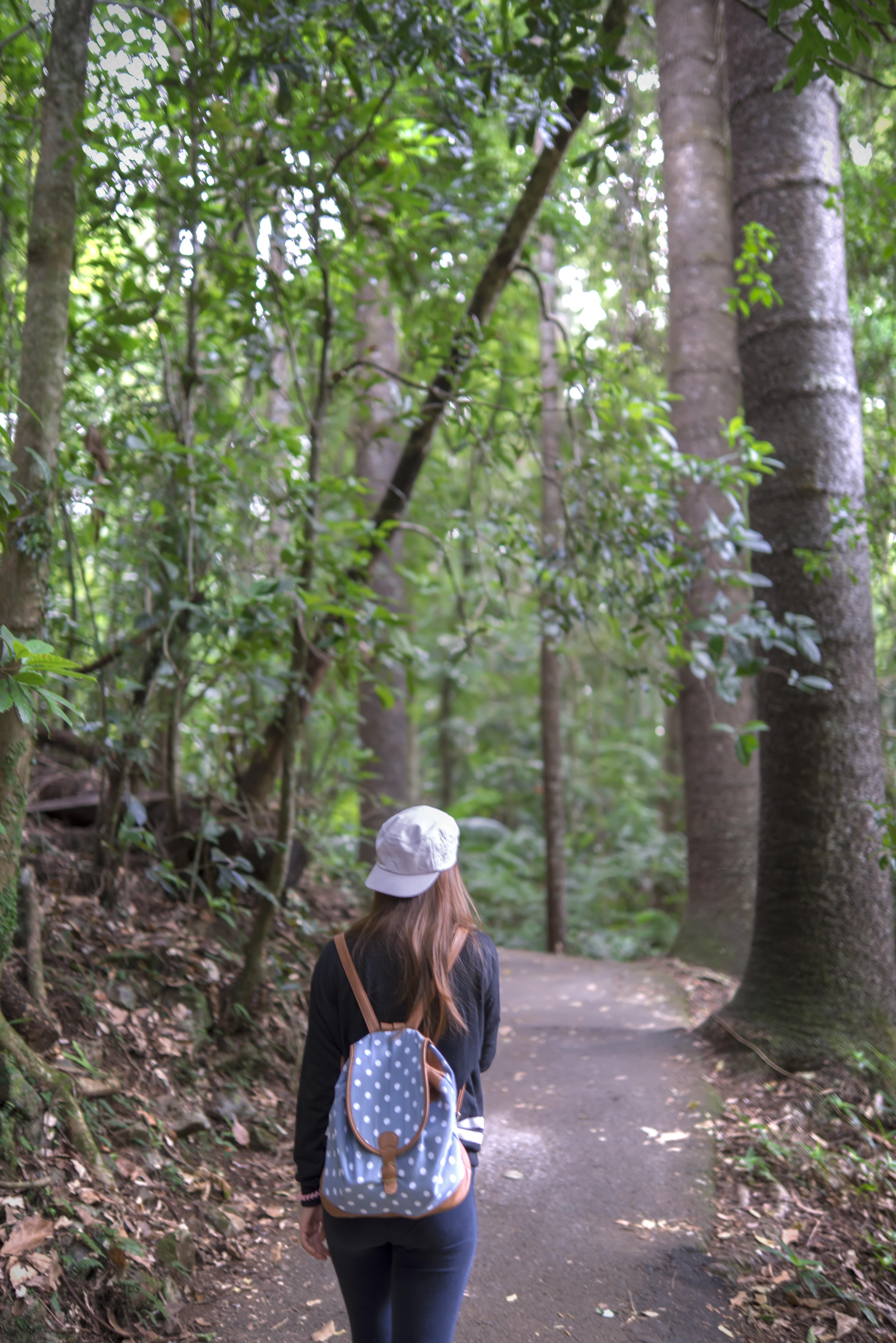 Free Images : coast, tree, forest, walking, trail, walk
