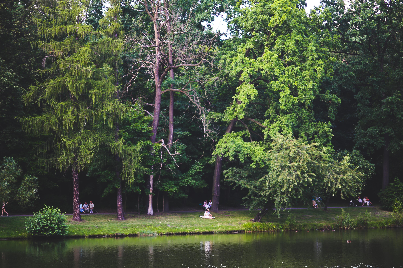 Fotos gratis costa rbol naturaleza bosque c sped for Arboles del jardin botanico