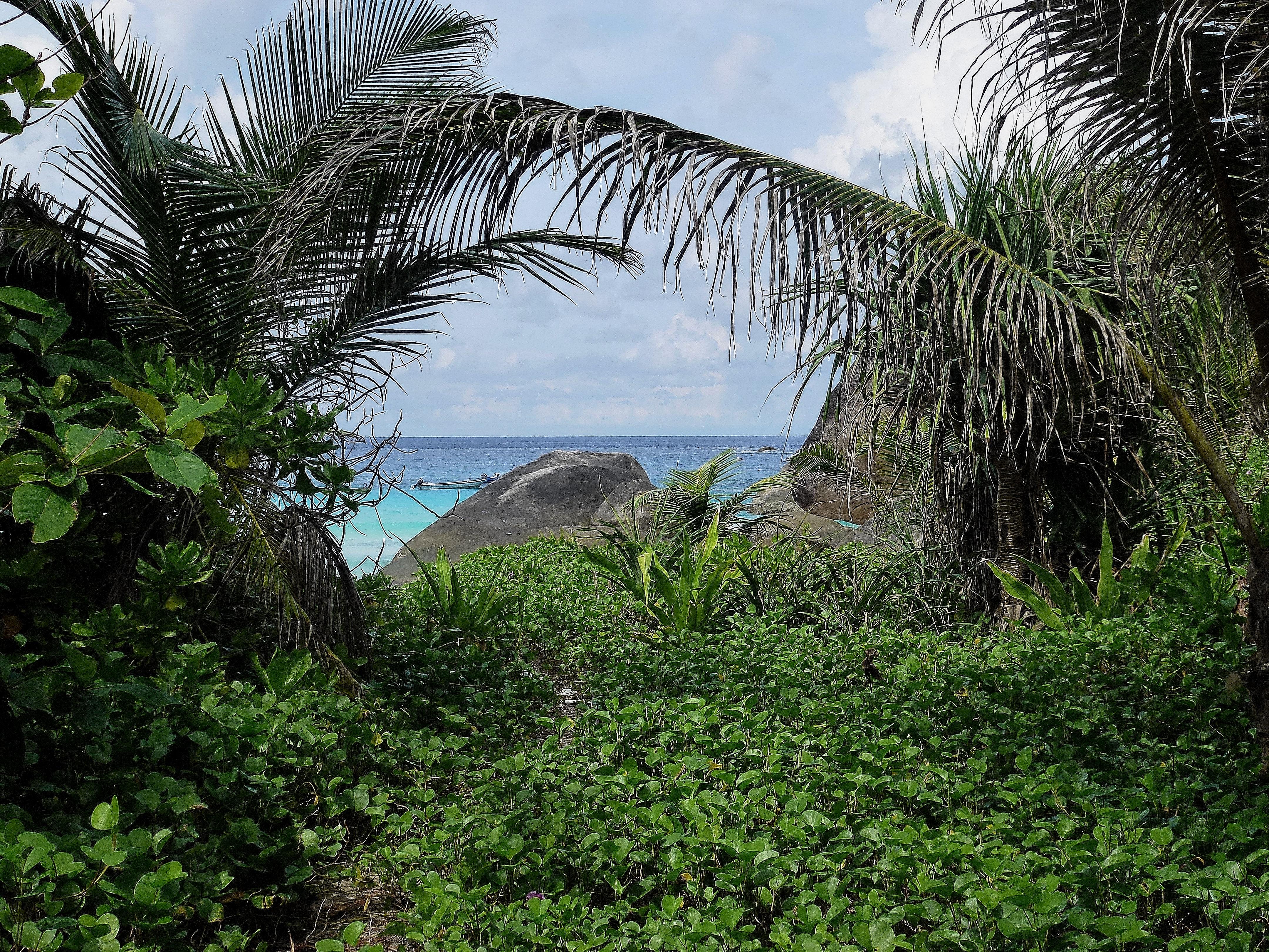 фото тропиков островов ей, ничего стала